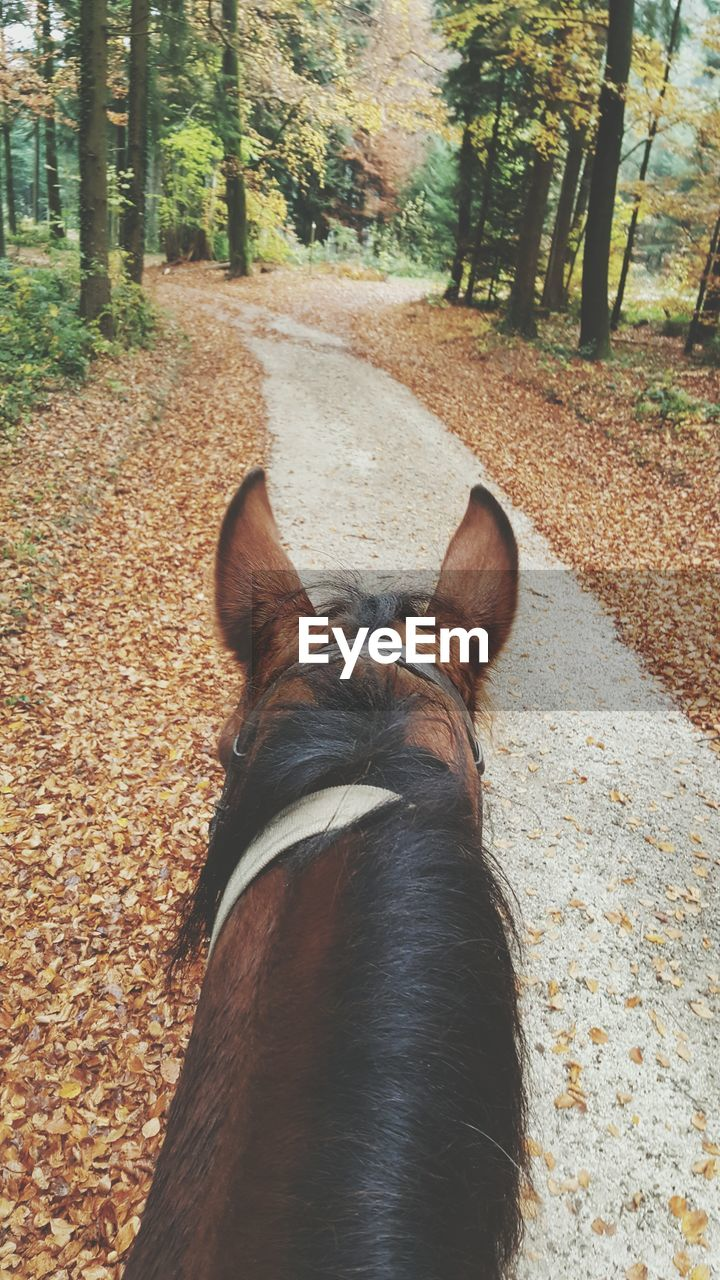 High angle view of horse walking in forest during autumn