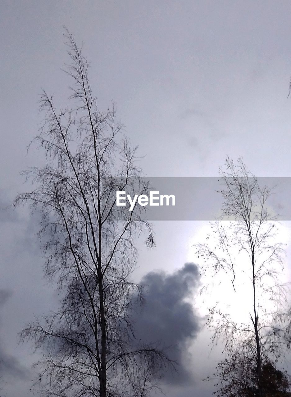 tree, sky, plant, bare tree, tranquility, beauty in nature, nature, cloud - sky, no people, branch, low angle view, scenics - nature, tranquil scene, silhouette, outdoors, day, non-urban scene, growth, fog, dead plant