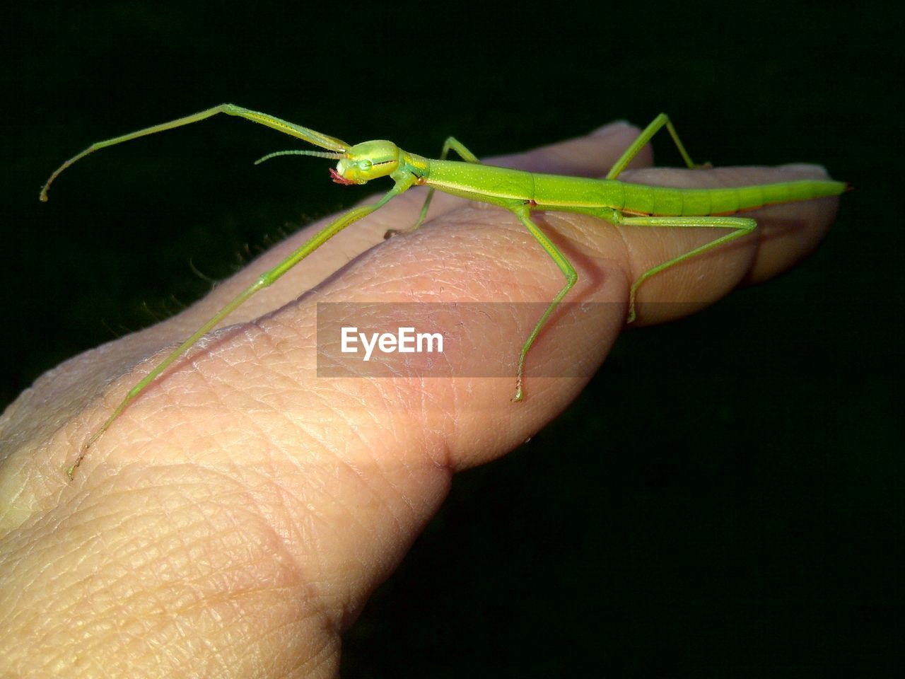 Close-Up Of Finger Holding Insect Over Black Background