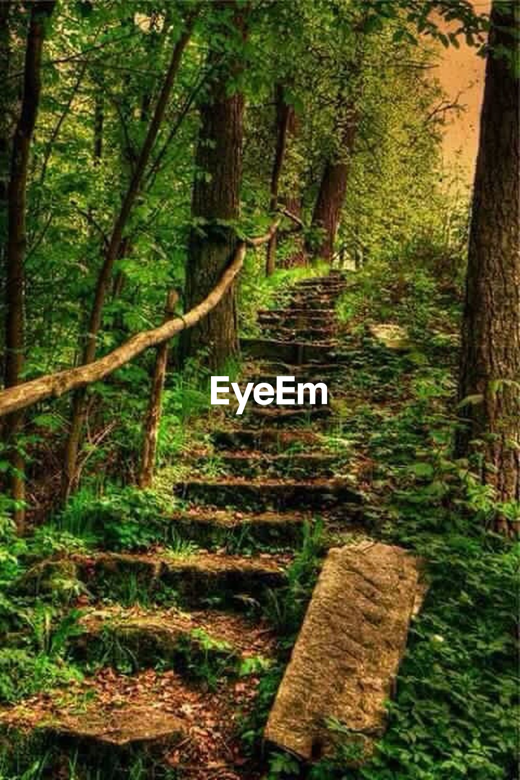 tree, forest, wood - material, growth, plant, tree trunk, built structure, tranquility, abandoned, steps, nature, green color, the way forward, old, wood, outdoors, day, wooden, architecture, no people