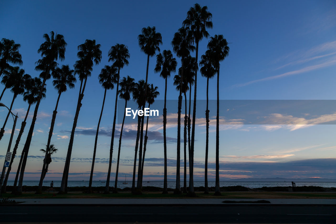 tree, sky, no people, palm tree, sunset, cloud - sky, nature, outdoors, growth, day, beauty in nature