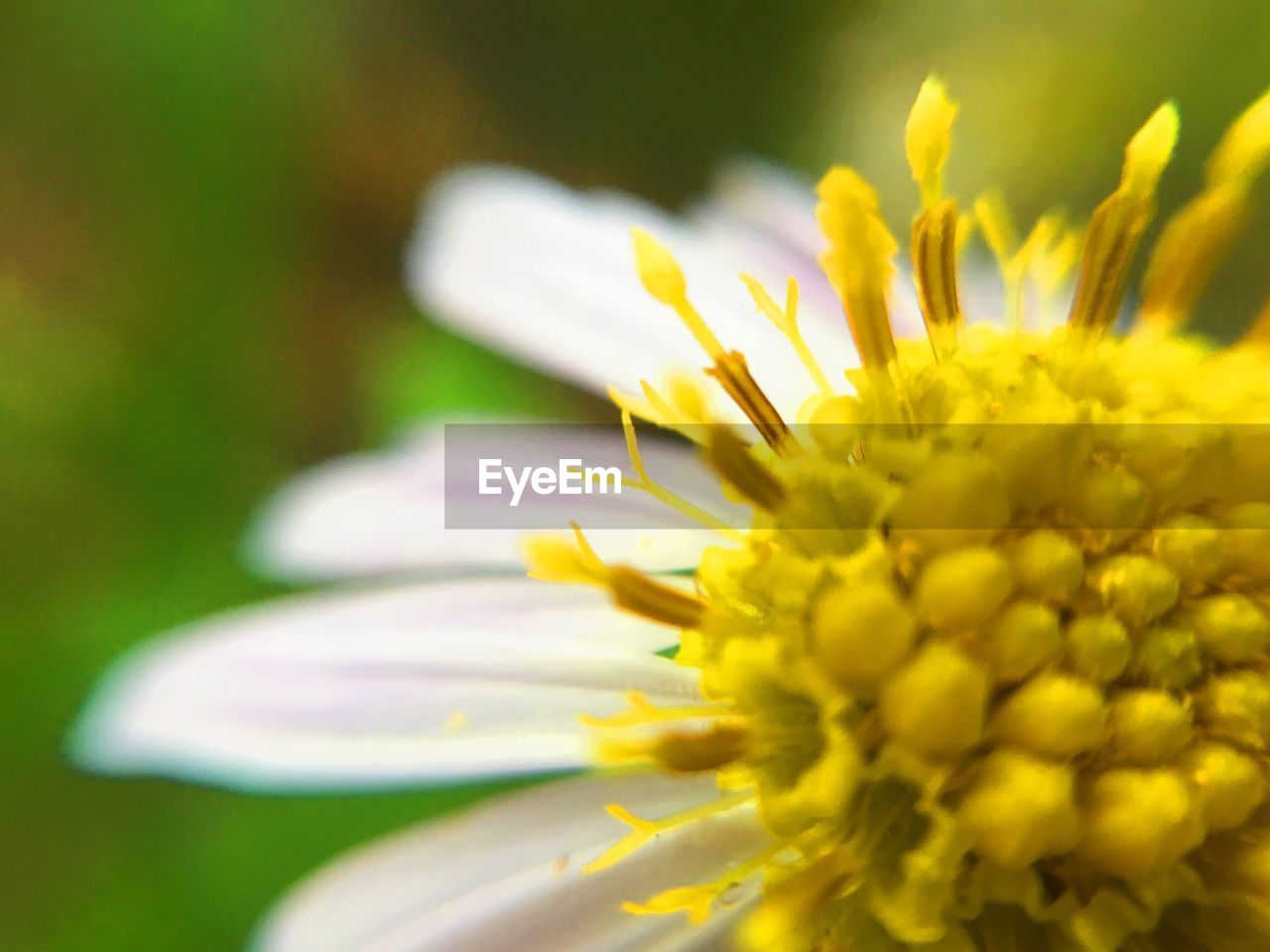 flower, petal, freshness, beauty in nature, nature, fragility, yellow, growth, flower head, selective focus, close-up, plant, outdoors, springtime, day, no people, blooming