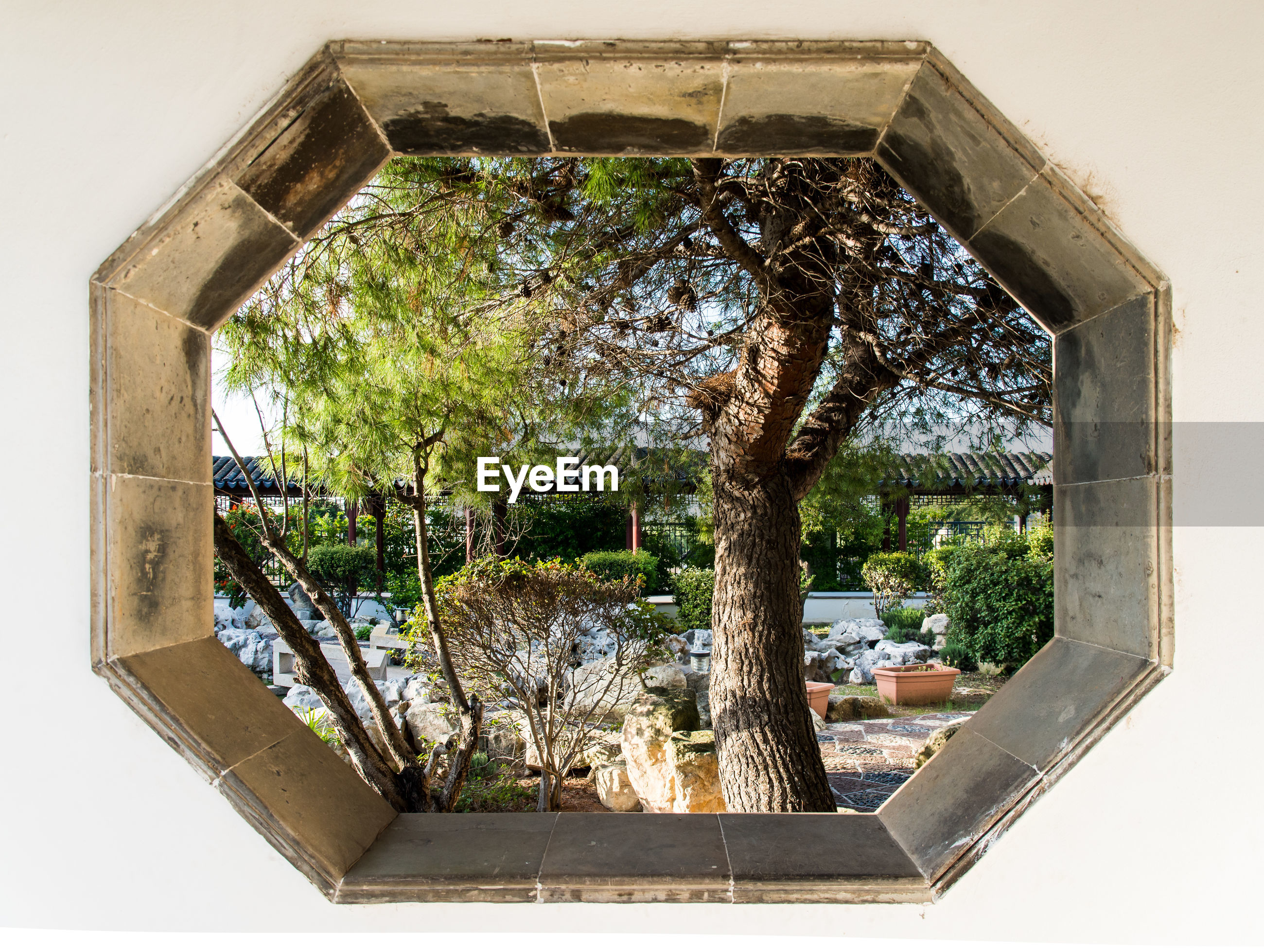 Trees and plants seen through window of building