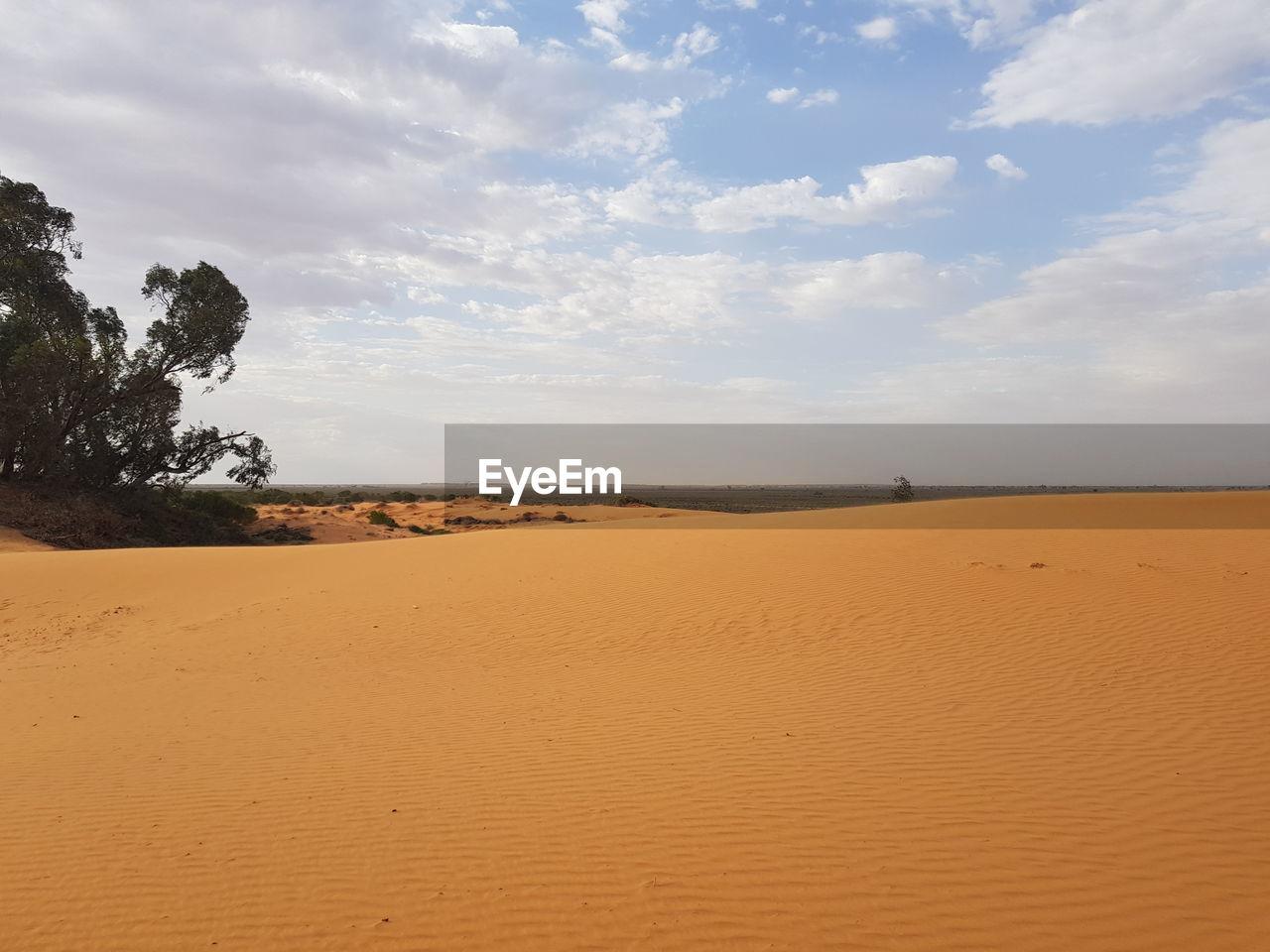 sky, cloud - sky, land, sand, scenics - nature, tranquility, tranquil scene, beauty in nature, nature, landscape, environment, desert, no people, non-urban scene, climate, arid climate, day, tree, plant, horizon, outdoors