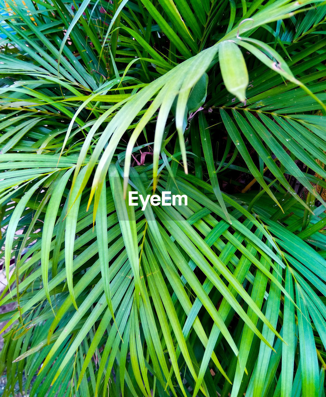 plant, green color, growth, leaf, plant part, beauty in nature, no people, nature, day, full frame, close-up, backgrounds, tree, freshness, outdoors, grass, green, lush foliage, foliage, high angle view, palm leaf