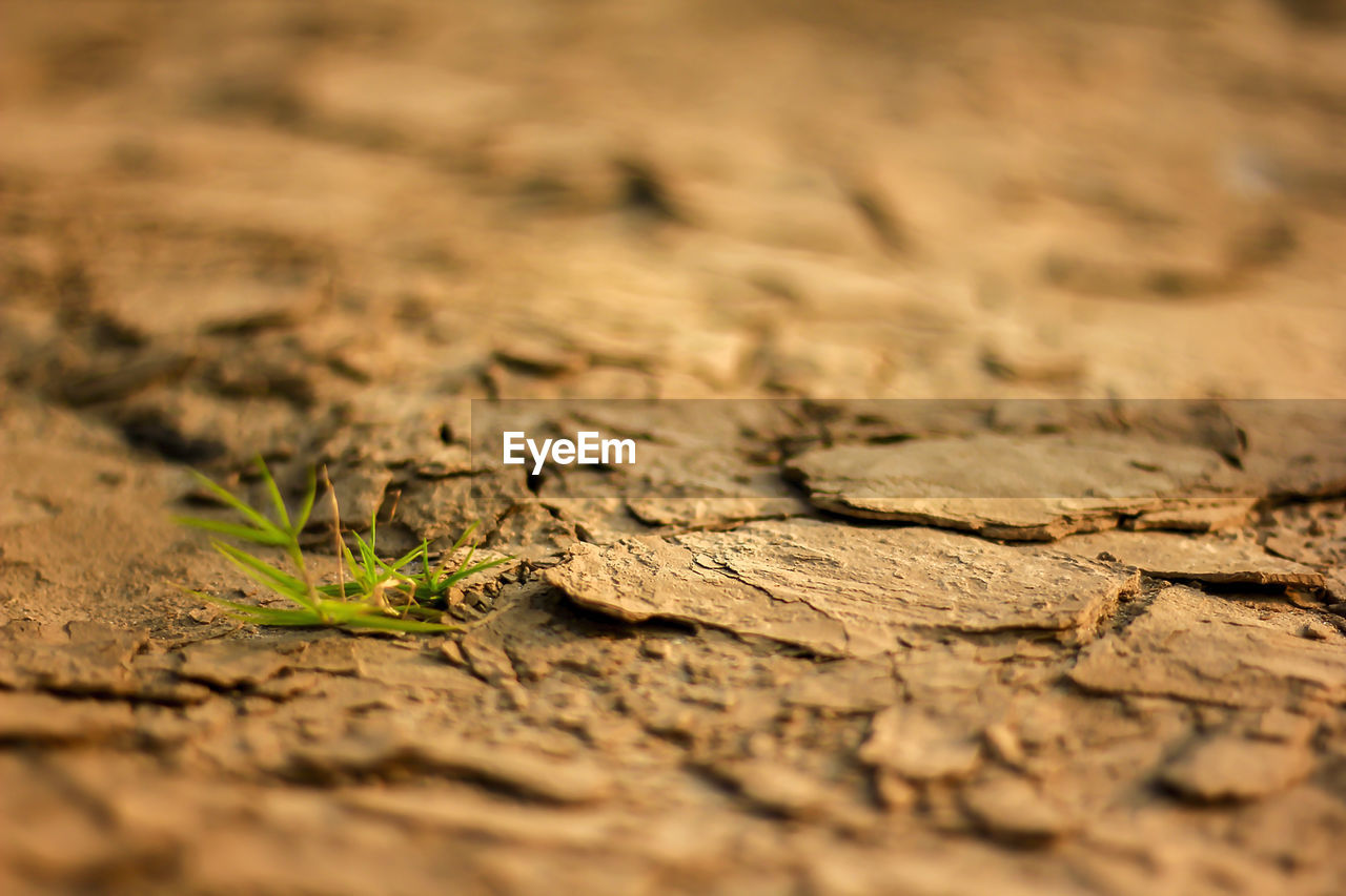 selective focus, nature, no people, land, close-up, plant, dry, plant part, leaf, field, day, drought, growth, brown, arid climate, outdoors, climate, dirt, textured, beauty in nature, surface level, mud