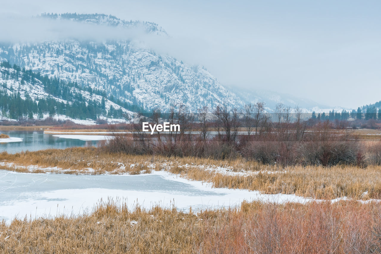 cold temperature, snow, winter, plant, tranquility, tranquil scene, scenics - nature, beauty in nature, environment, landscape, mountain, grass, tree, nature, sky, no people, water, land, day, mountain range, outdoors, snowcapped mountain