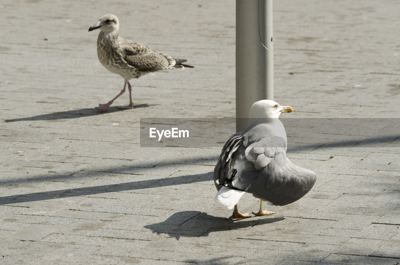 bird, vertebrate, animal themes, animal, animals in the wild, group of animals, animal wildlife, sunlight, seagull, shadow, no people, nature, day, perching, two animals, focus on foreground, full length, footpath, outdoors, animal family