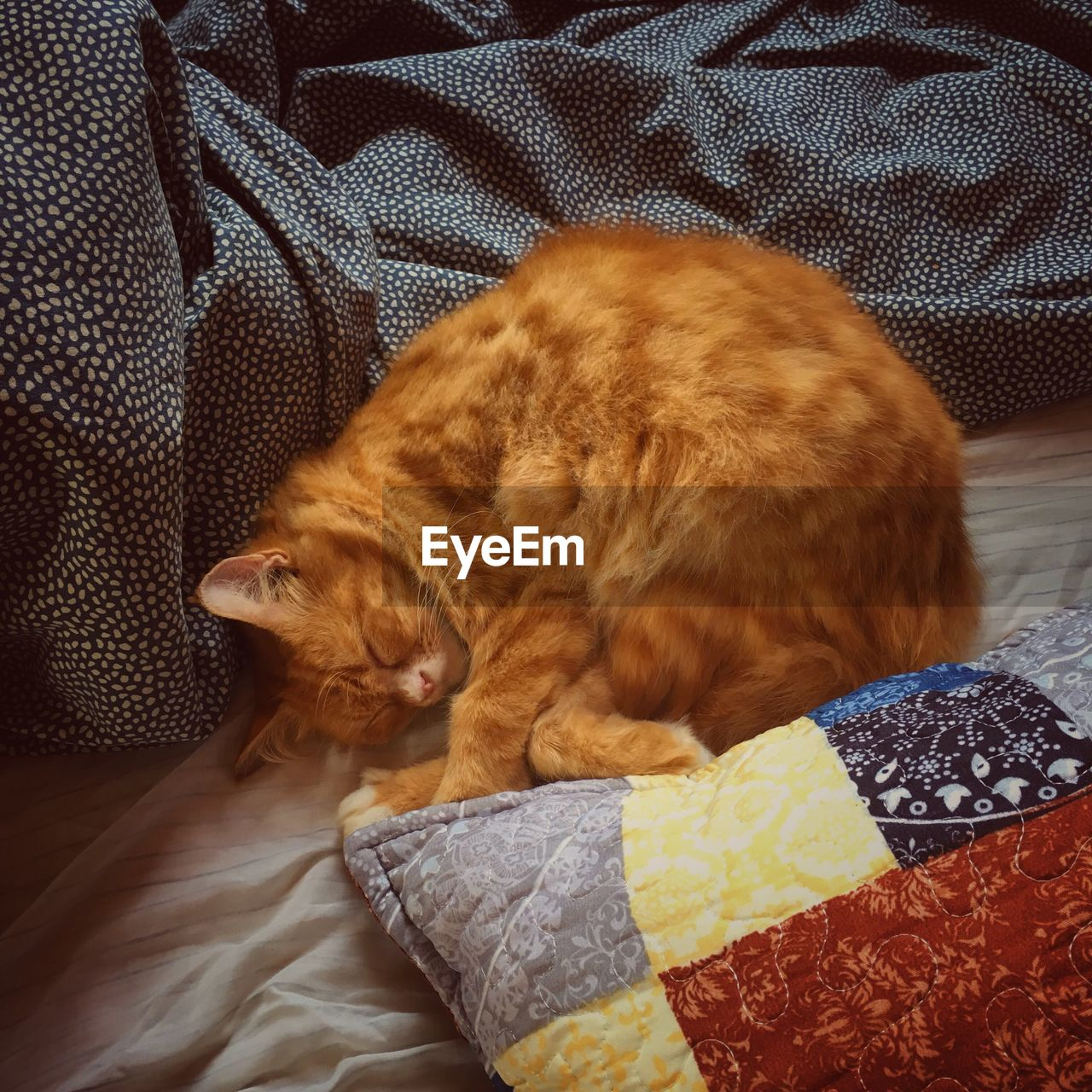domestic, pets, domestic animals, cat, mammal, animal themes, domestic cat, animal, feline, furniture, one animal, relaxation, vertebrate, bed, indoors, sleeping, resting, no people, lying down, pillow, whisker, ginger cat