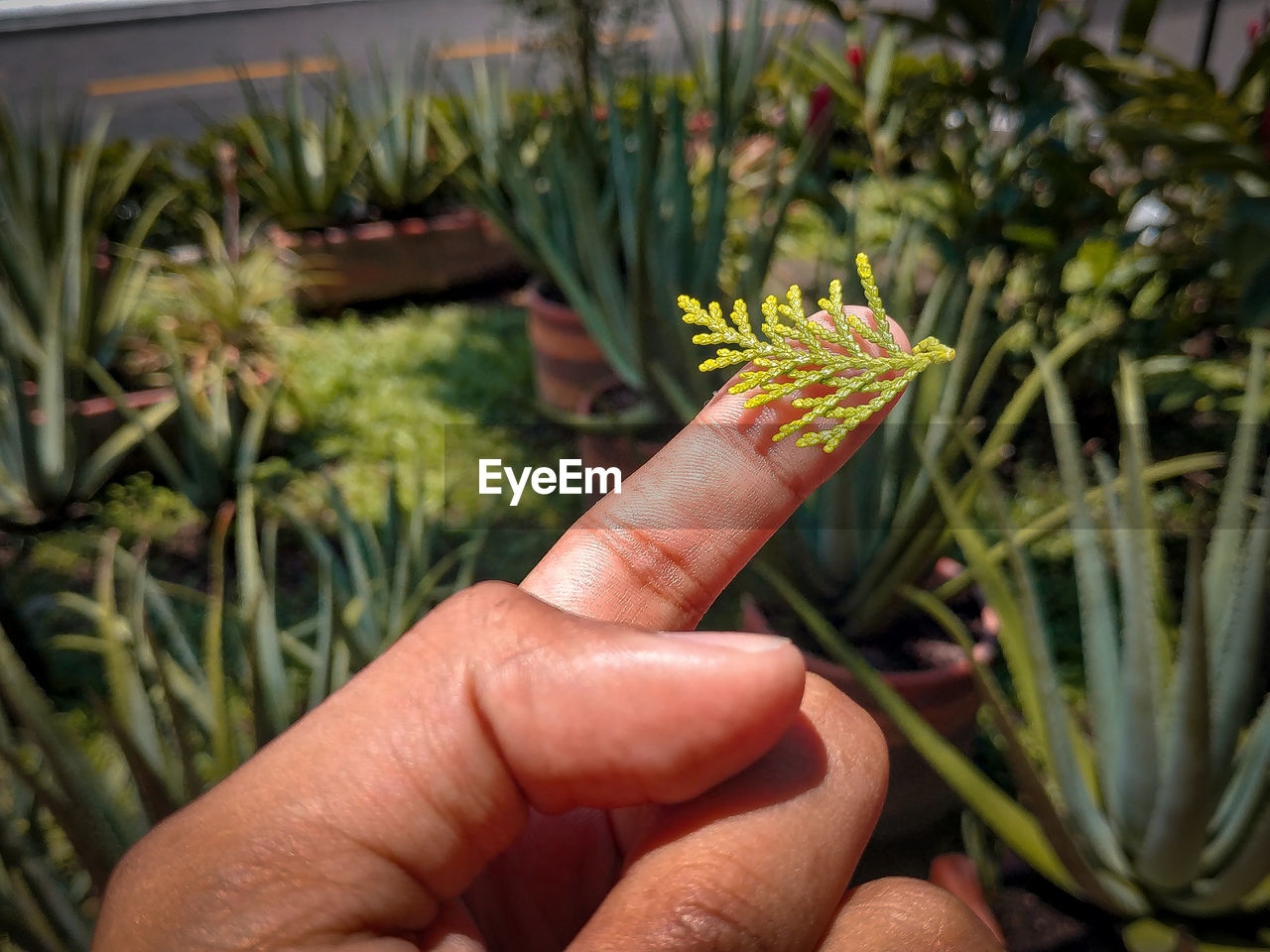 human hand, hand, human body part, one person, real people, plant, growth, green color, finger, body part, human finger, flower, personal perspective, holding, nature, flowering plant, lifestyles, focus on foreground, day, unrecognizable person, outdoors, human limb