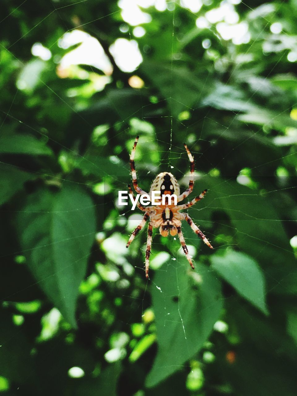 invertebrate, animal themes, insect, one animal, animal wildlife, animal, animals in the wild, arachnid, plant part, spider, close-up, leaf, day, nature, arthropod, no people, outdoors, fragility, plant, green color, animal leg