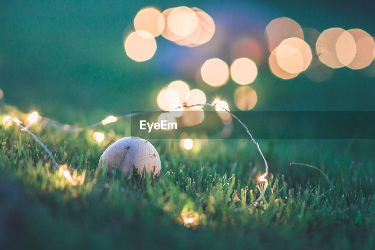 Mushroom Amidst Illuminated String Lights On Grassy Field At Night