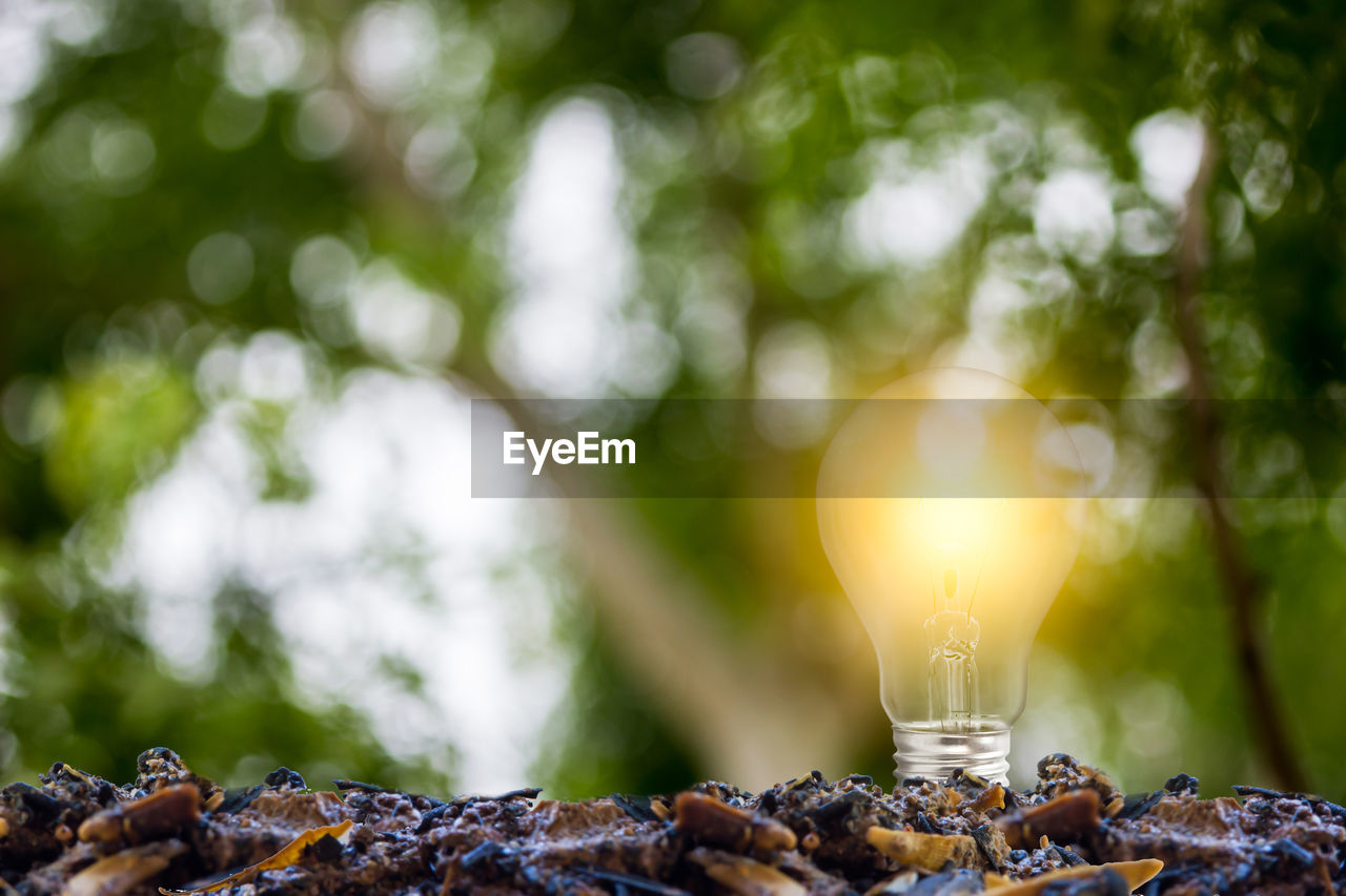 focus on foreground, close-up, no people, food and drink, selective focus, lighting equipment, food, day, illuminated, tree, nature, candle, glowing, outdoors, electricity, freshness, still life, lens flare, wellbeing, plant