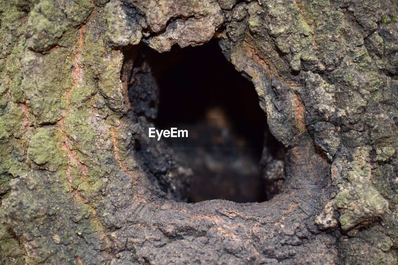tree trunk, hole, tree, textured, day, no people, close-up, nature, outdoors, growth