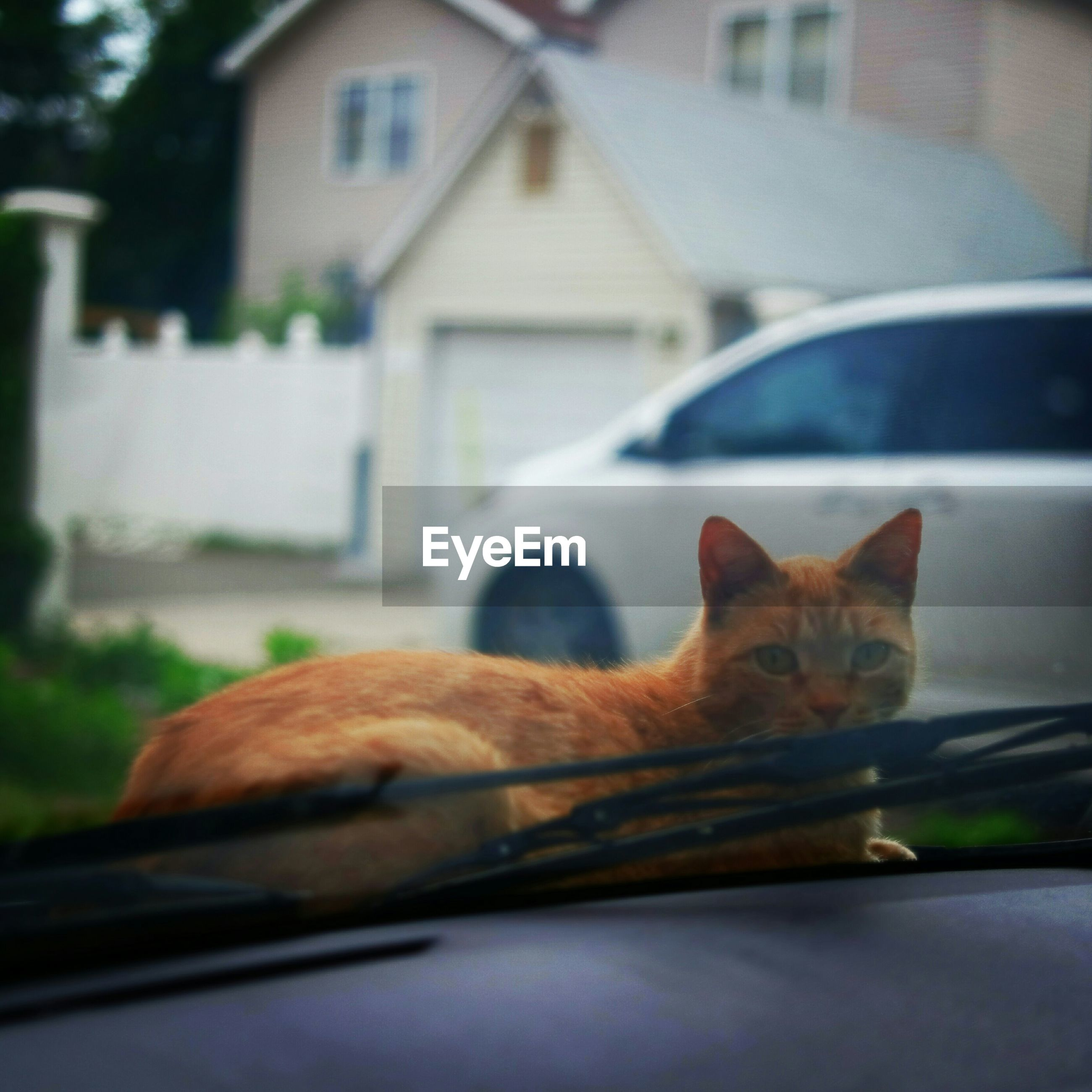Close-up of cat sitting on car seen through windshield
