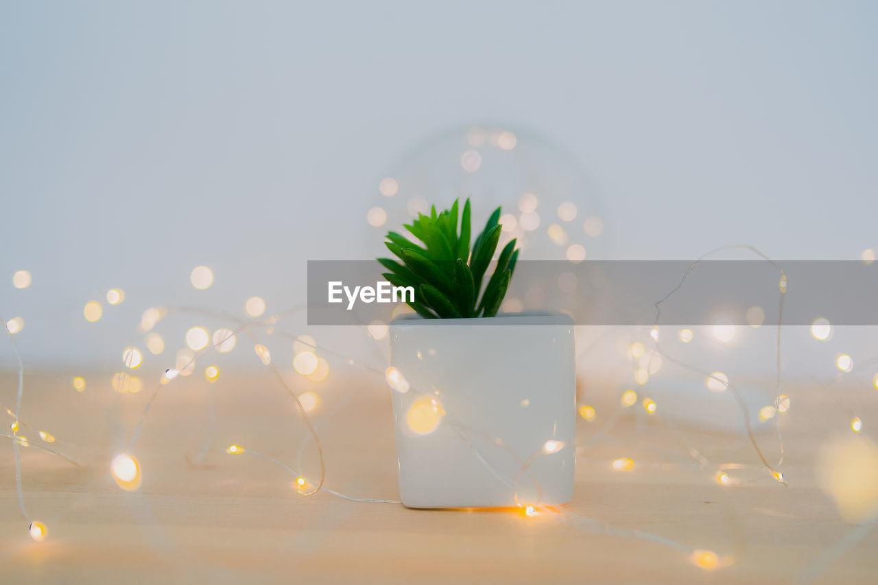 Close-up of illuminated plant on table