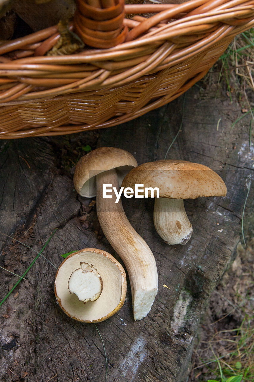 mushroom, fungus, food, vegetable, food and drink, edible mushroom, toadstool, freshness, no people, plant, wood - material, tree, close-up, high angle view, growth, nature, healthy eating, day, wellbeing, land, outdoors