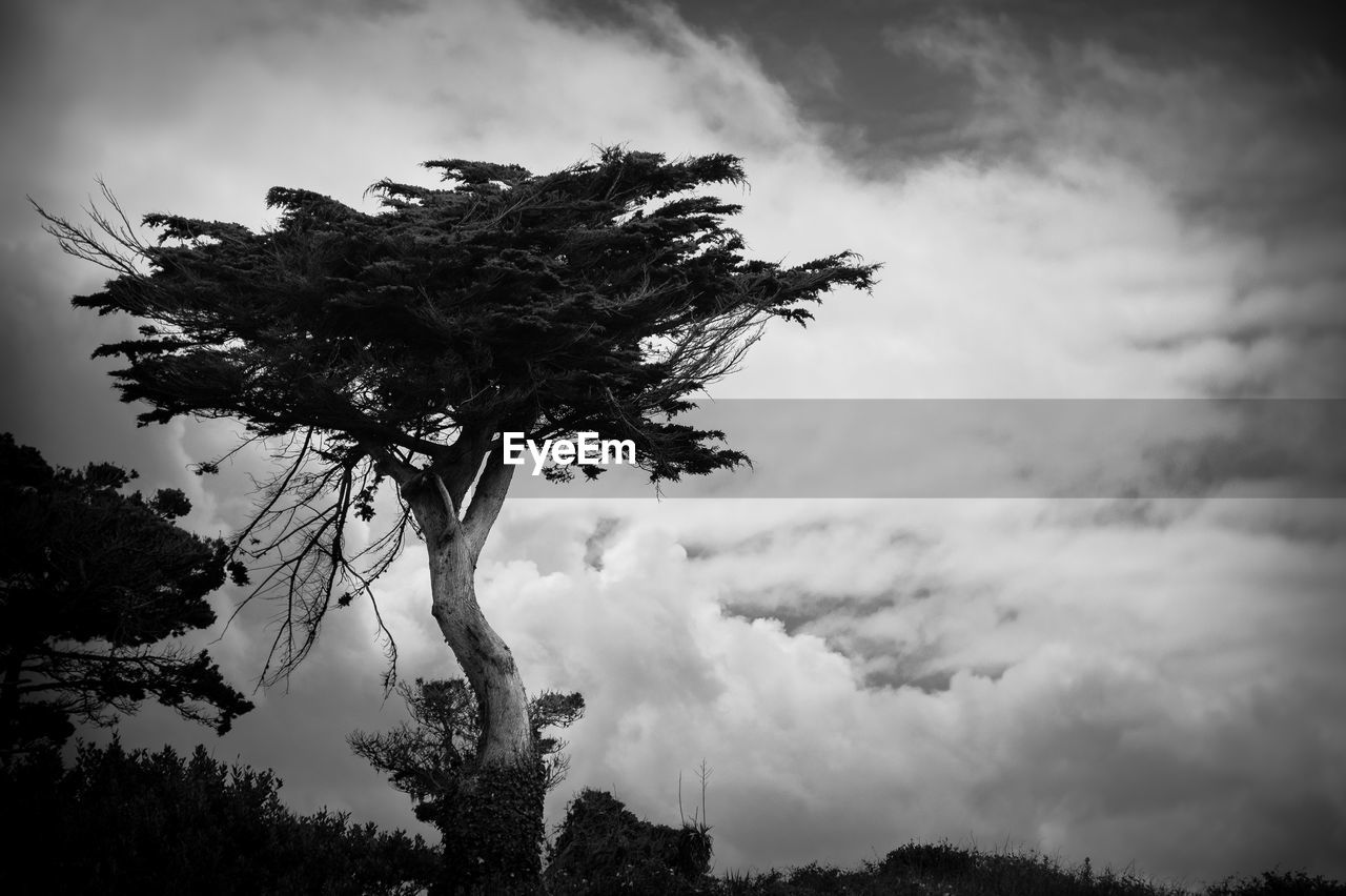 cloud - sky, sky, tree, plant, beauty in nature, growth, nature, tranquility, low angle view, no people, day, scenics - nature, outdoors, tranquil scene, non-urban scene, branch, land, environment, overcast, coniferous tree