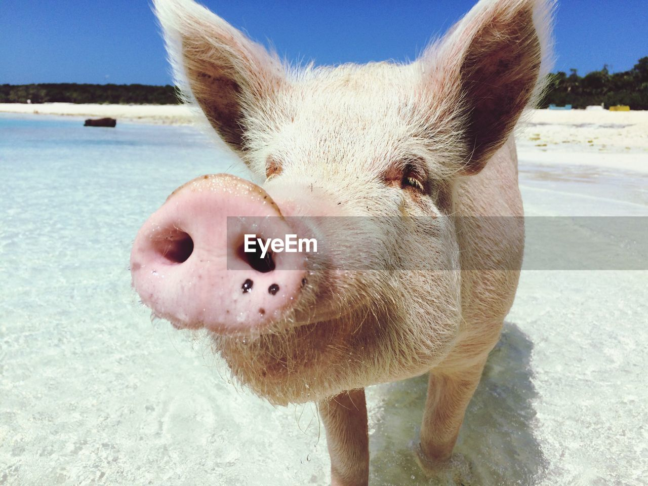 mammal, animal, one animal, animal themes, close-up, nature, land, water, pets, domestic, day, domestic animals, beach, portrait, sea, no people, looking at camera, vertebrate, outdoors, animal head, snout