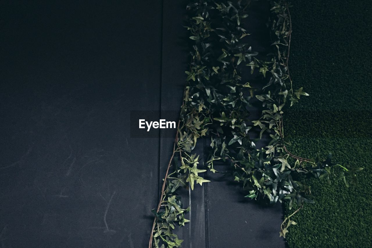 PLANTS GROWING ON TREE