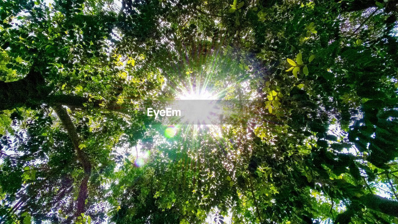 tree, plant, low angle view, beauty in nature, sky, no people, sunlight, nature, sunbeam, growth, green color, lens flare, day, outdoors, forest, shiny, sun, branch, scenics - nature, bright, streaming, tree canopy, directly below, brightly lit, solar flare