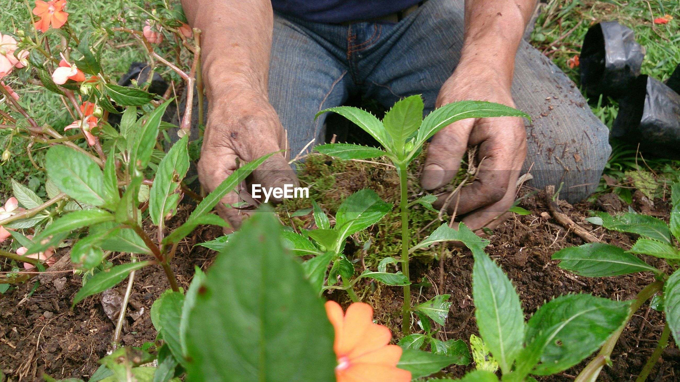 Midsection of man planting on field
