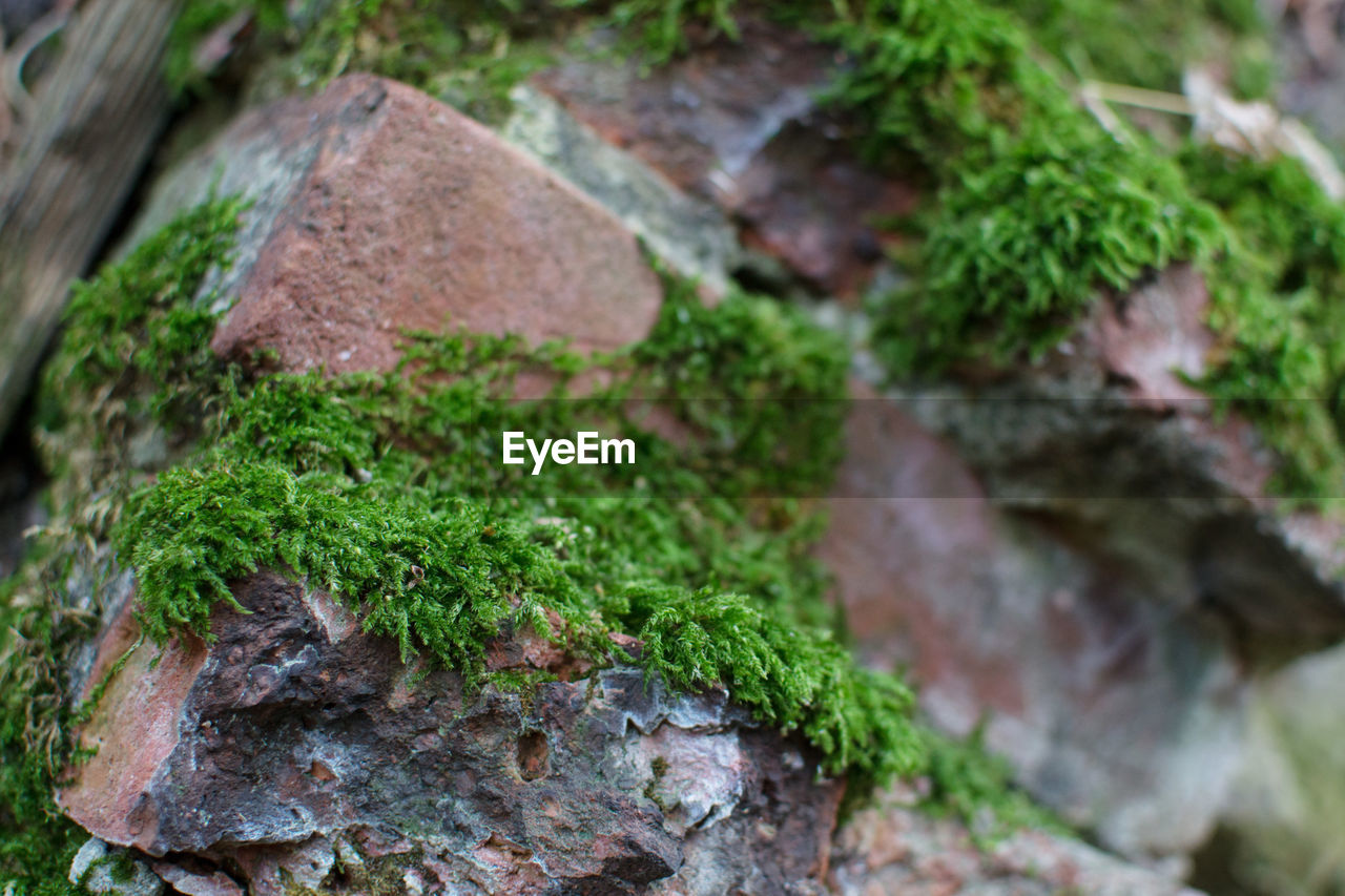 plant, moss, growth, no people, selective focus, green color, day, rock, solid, close-up, nature, rock - object, focus on foreground, outdoors, textured, tree, rough, plant part, tree trunk, trunk, lichen