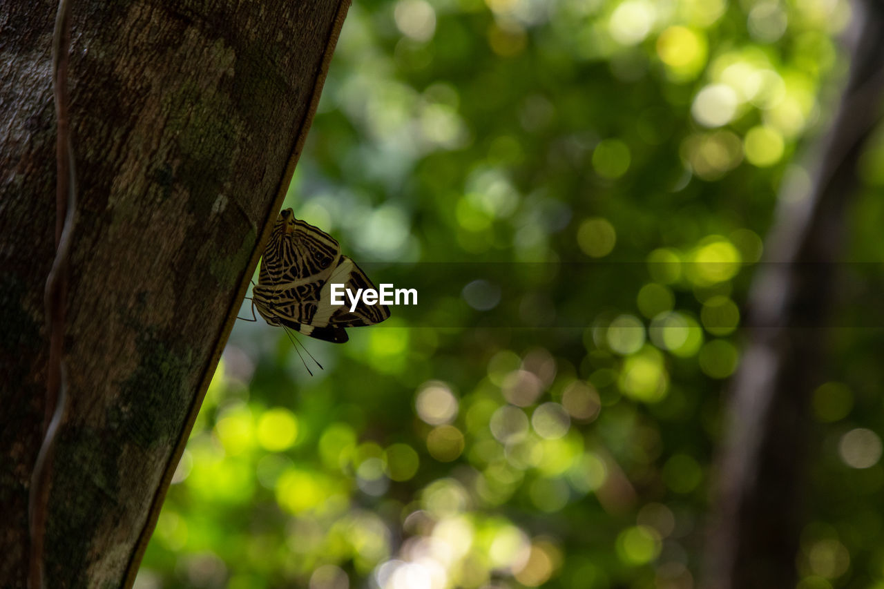 animals in the wild, animal wildlife, one animal, animal themes, animal, tree, focus on foreground, insect, invertebrate, tree trunk, trunk, plant, close-up, no people, animal wing, nature, day, butterfly - insect, beauty in nature, outdoors