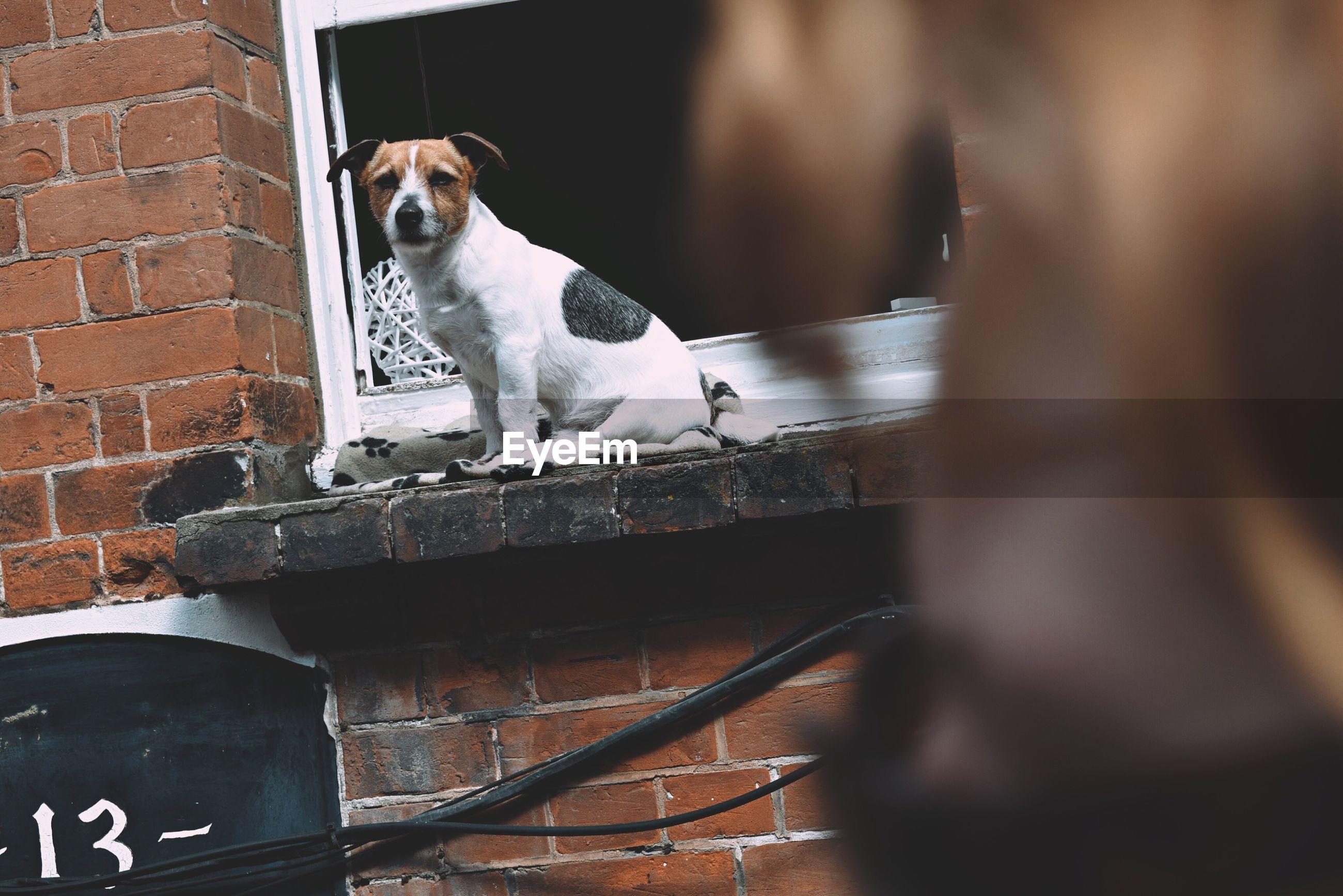 Dog sitting on window sill in yard