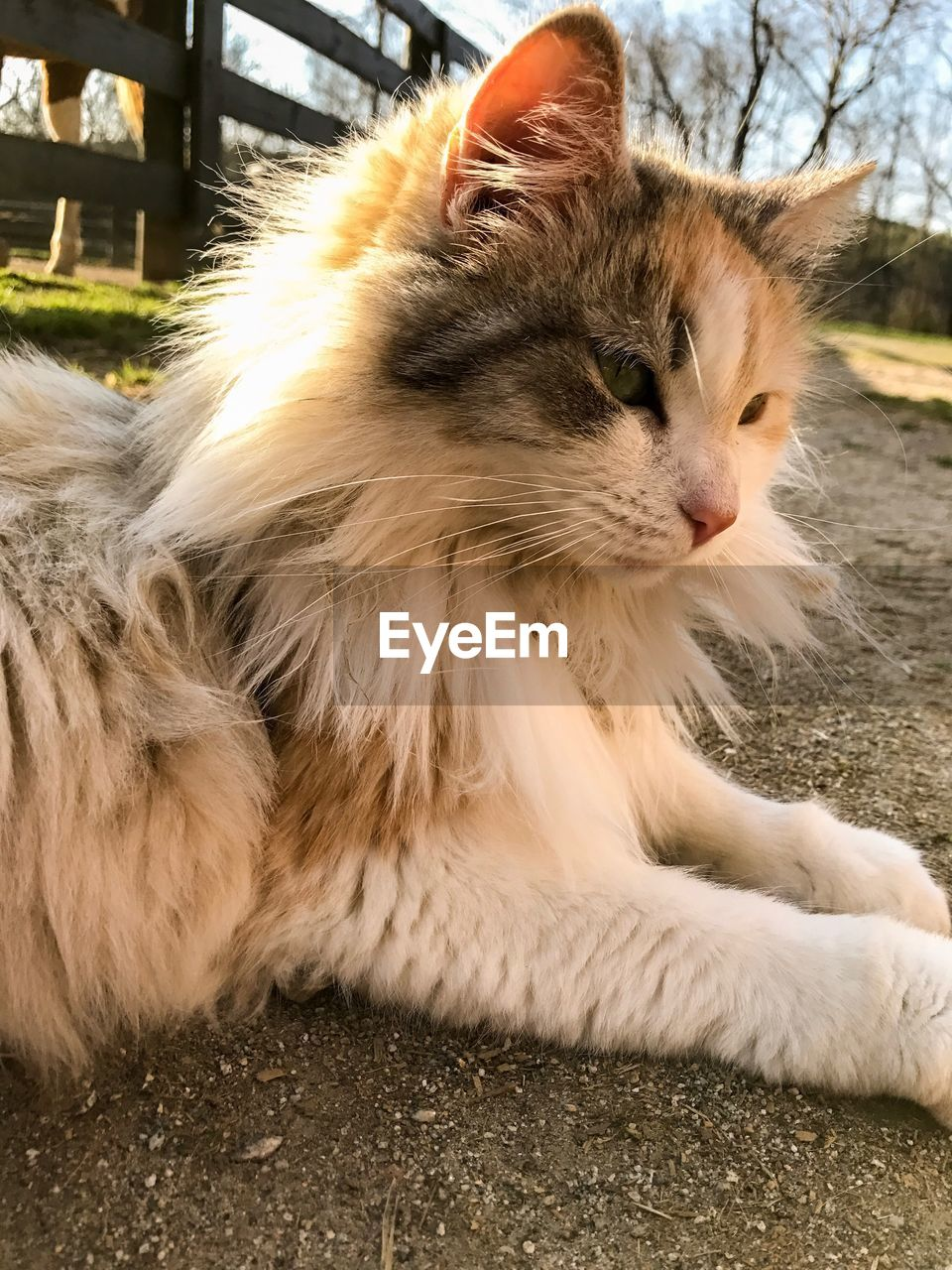 domestic animals, pets, animal themes, mammal, one animal, domestic cat, feline, whisker, day, sitting, no people, outdoors, close-up
