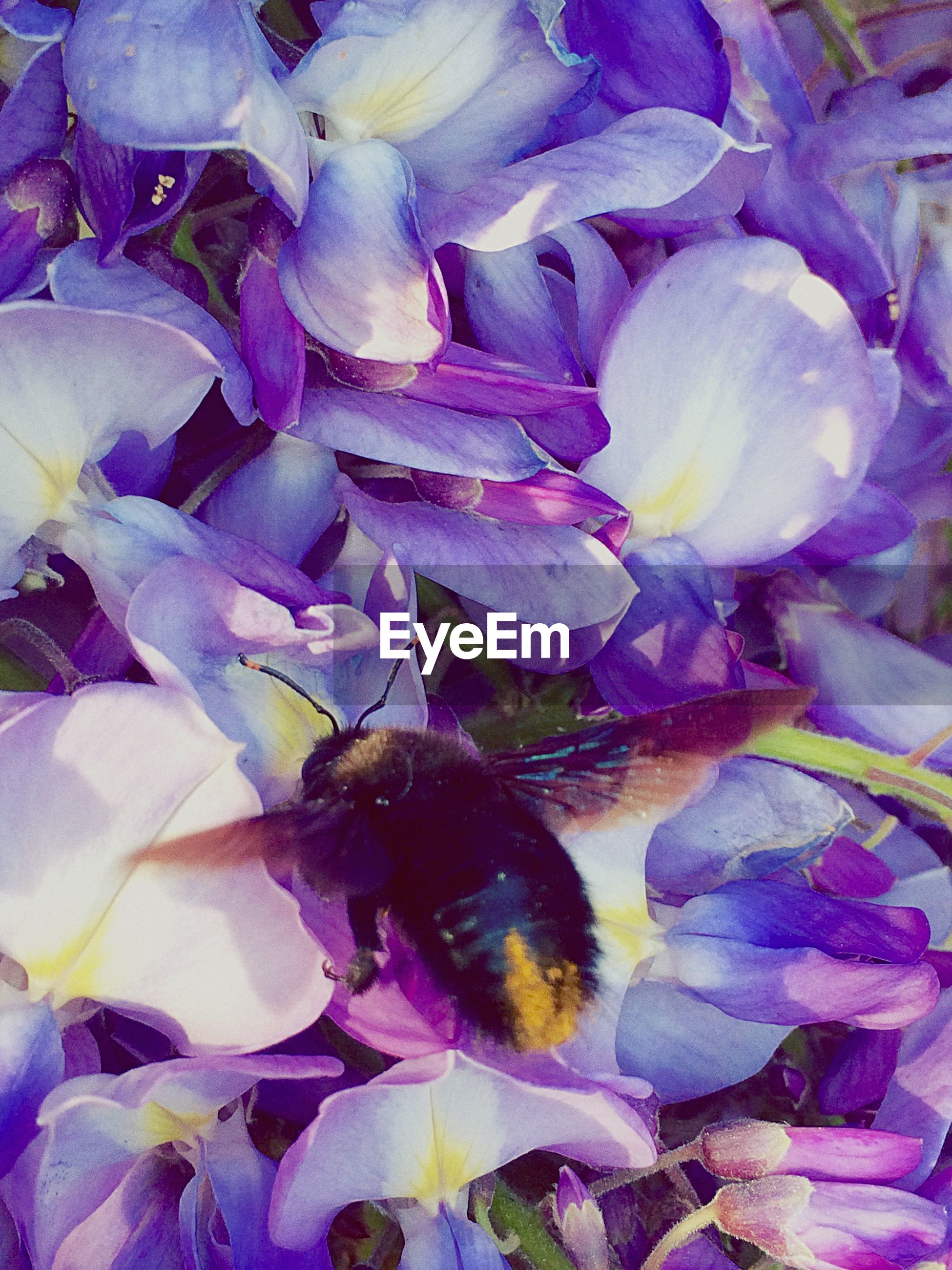 flower, animal themes, full frame, petal, fragility, freshness, purple, backgrounds, one animal, close-up, flower head, beauty in nature, nature, insect, indoors, growth, wildlife, high angle view, animals in the wild, plant