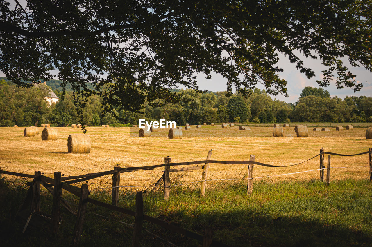 plant, tree, boundary, field, barrier, land, fence, landscape, grass, nature, agriculture, no people, environment, beauty in nature, livestock, rural scene, hay, tranquil scene, day, tranquility, outdoors
