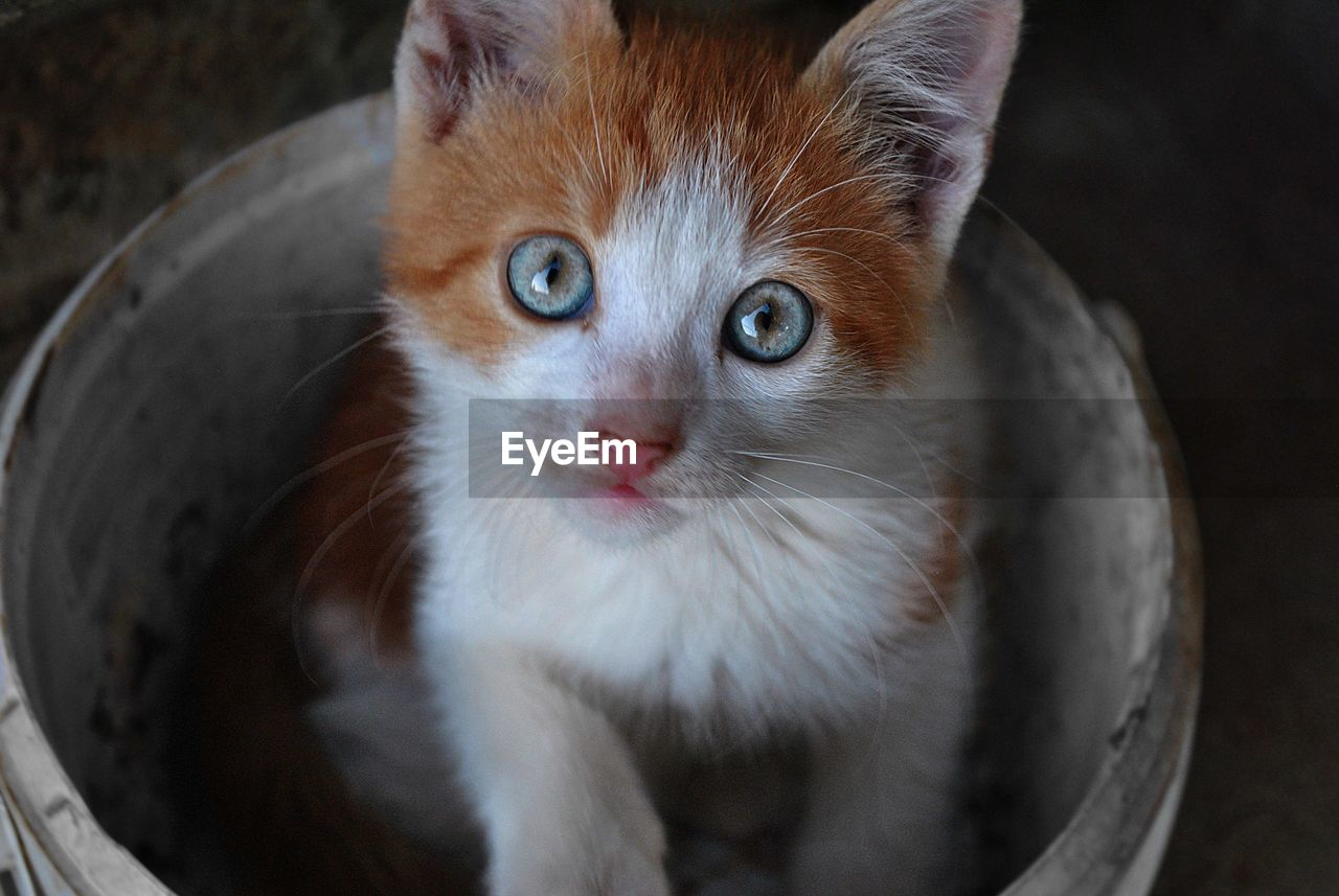 animal themes, pets, mammal, one animal, animal, domestic, domestic animals, cat, feline, domestic cat, vertebrate, looking at camera, portrait, no people, close-up, whisker, indoors, focus on foreground, kitten, animal body part, animal eye, animal head