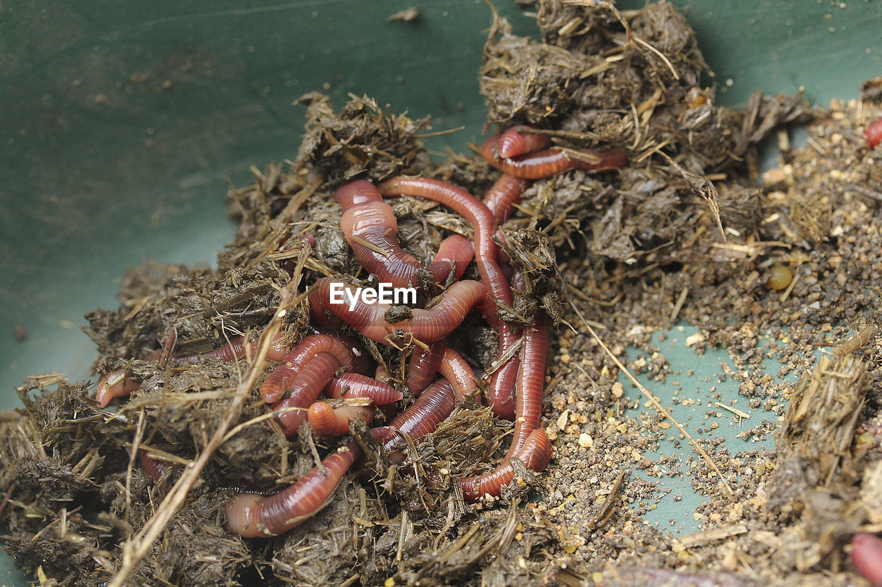 Close-up of worms on ground