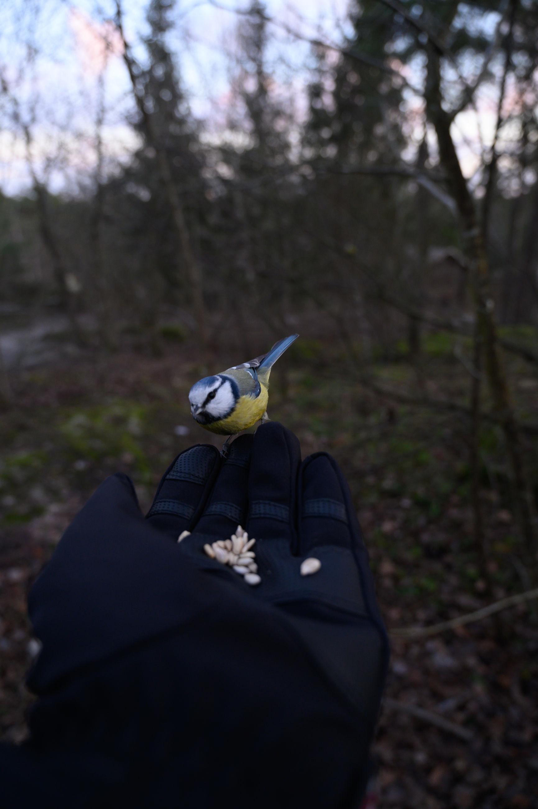 Bird sitting in hand