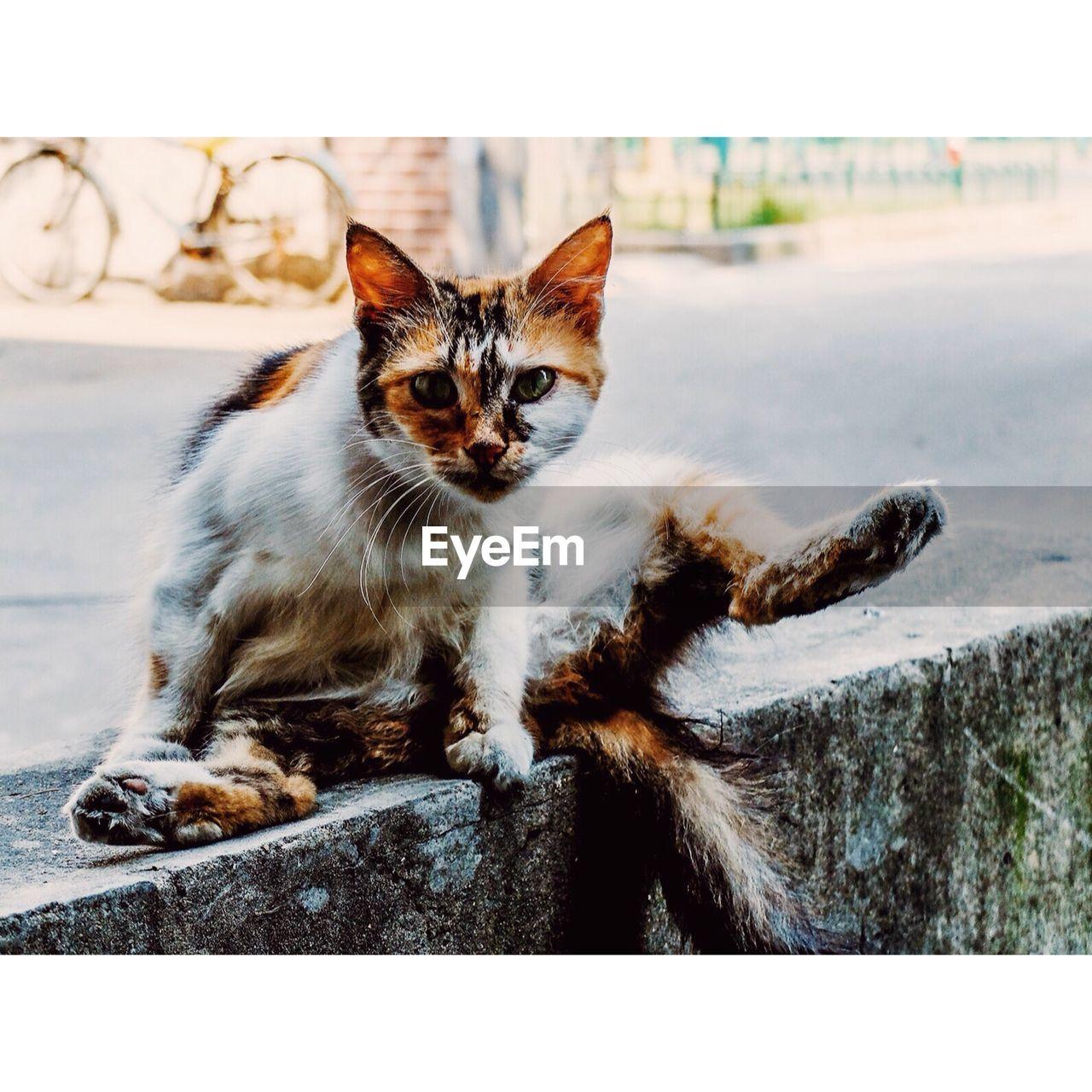 Portrait Of Cat Relaxing On Street