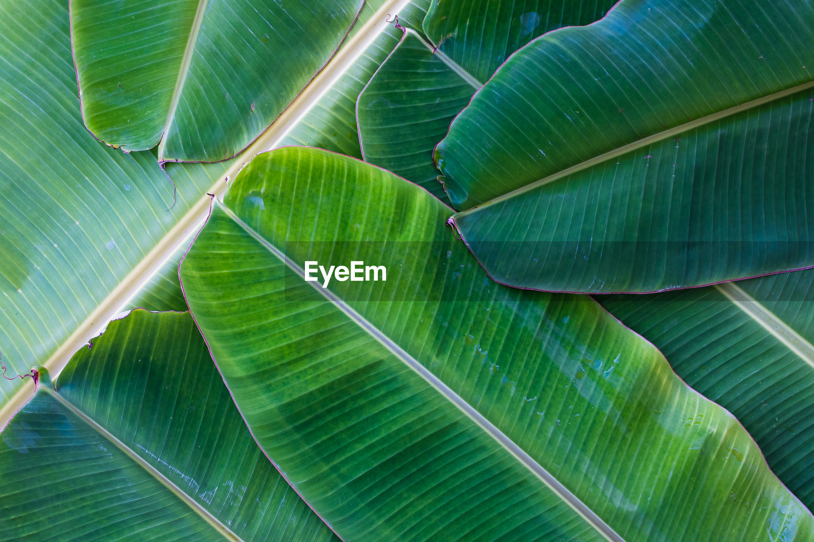 FULL FRAME SHOT OF LEAF WITH PALM LEAVES