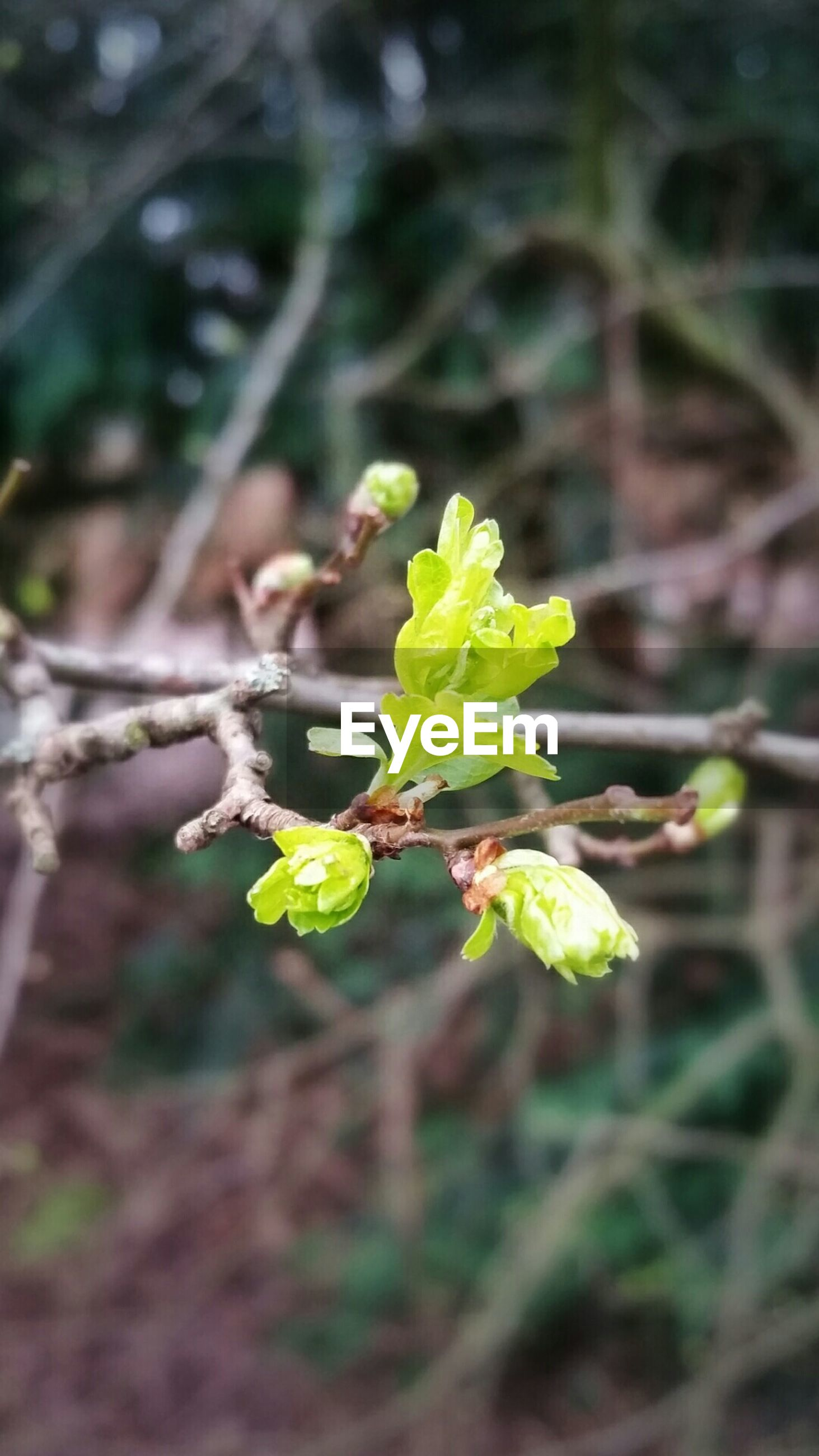 growth, leaf, green color, plant, focus on foreground, close-up, nature, freshness, selective focus, new life, beginnings, beauty in nature, growing, stem, bud, outdoors, green, day, fragility, no people