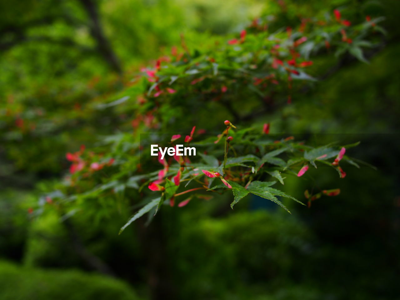 growth, plant, green color, beauty in nature, leaf, plant part, nature, no people, selective focus, outdoors, close-up, day, red, tranquility, field, focus on foreground, land, food and drink, food, freshness, leaves