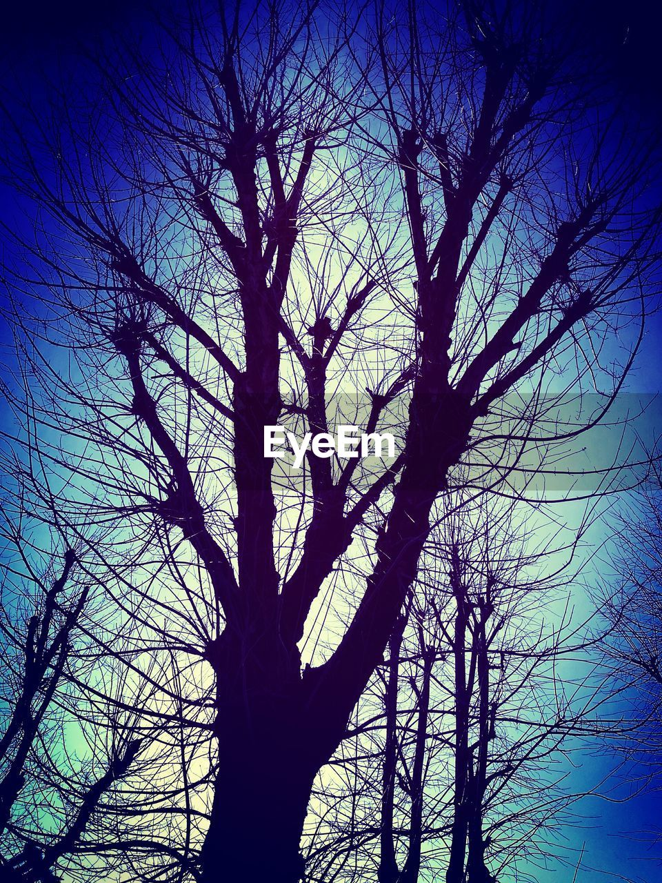 bare tree, tree, branch, low angle view, silhouette, nature, tree trunk, sky, tranquility, outdoors, no people, beauty in nature, day