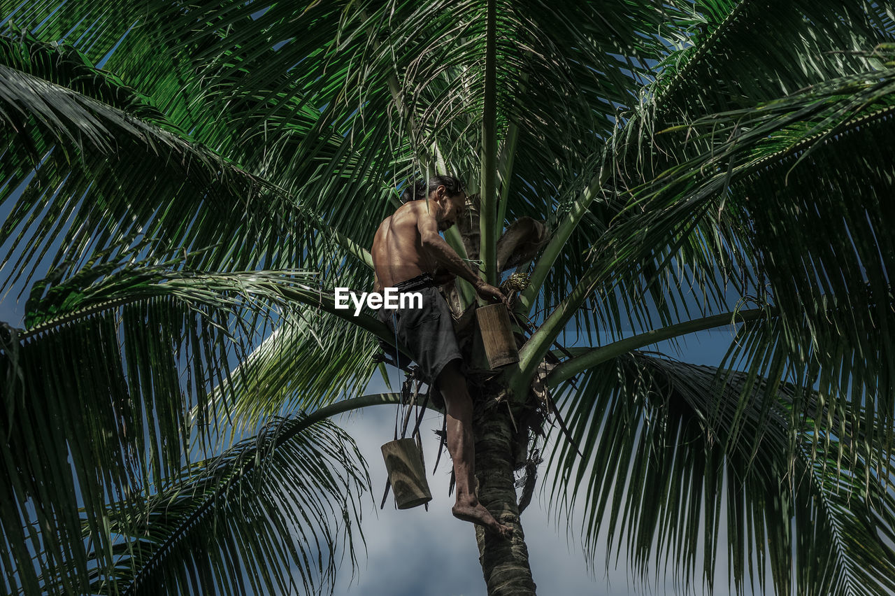 Low Angle View Of Shirtless Man Climbing On Palm Tree