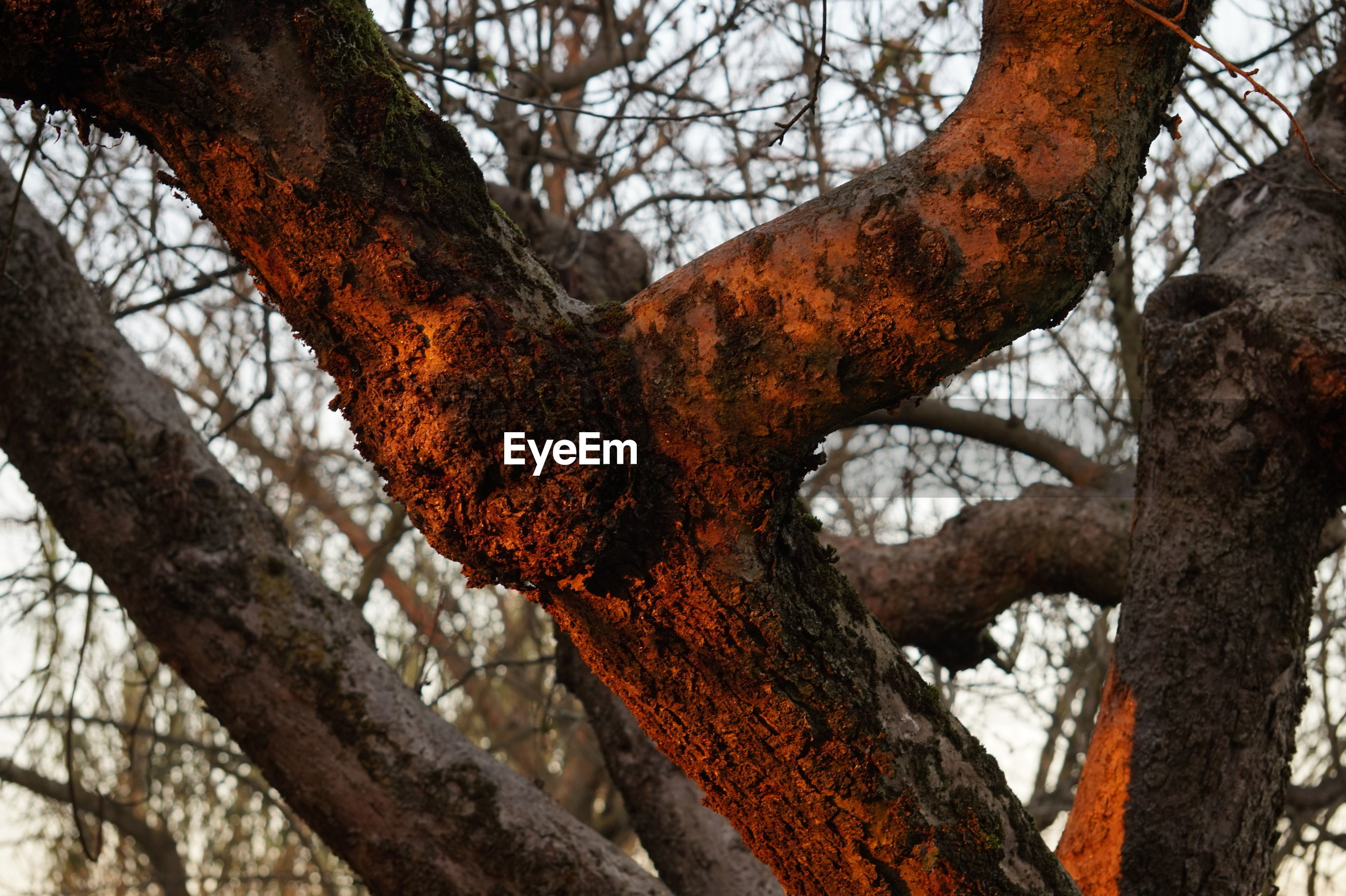 tree, tree trunk, branch, close-up, low angle view, nature, bare tree, focus on foreground, day, textured, sky, bark, wood - material, growth, outdoors, tranquility, no people, part of, weathered, beauty in nature
