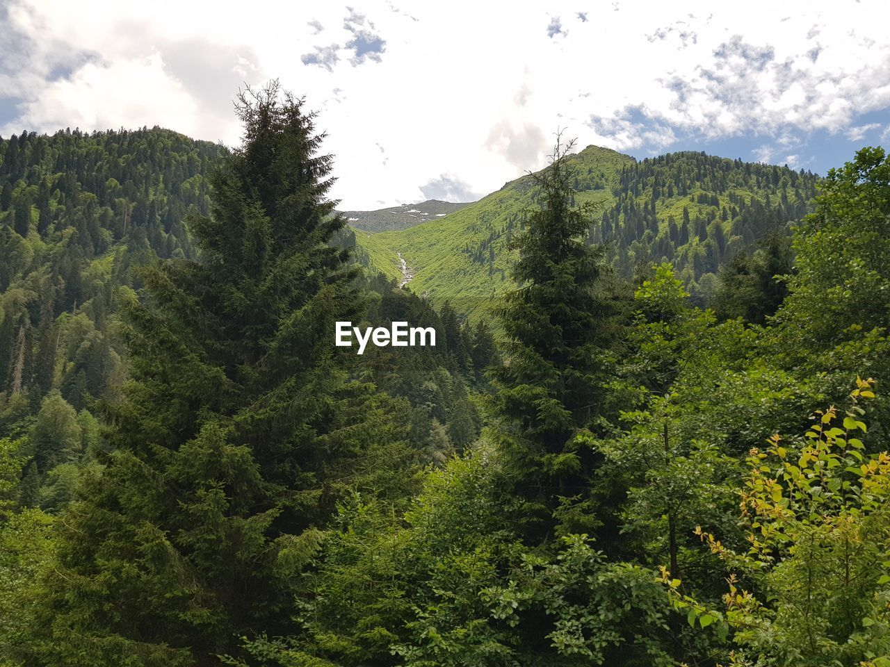 plant, sky, tree, growth, green color, beauty in nature, mountain, nature, environment, cloud - sky, no people, forest, scenics - nature, foliage, lush foliage, land, landscape, tranquil scene, tranquility, day, mountain range, high, range