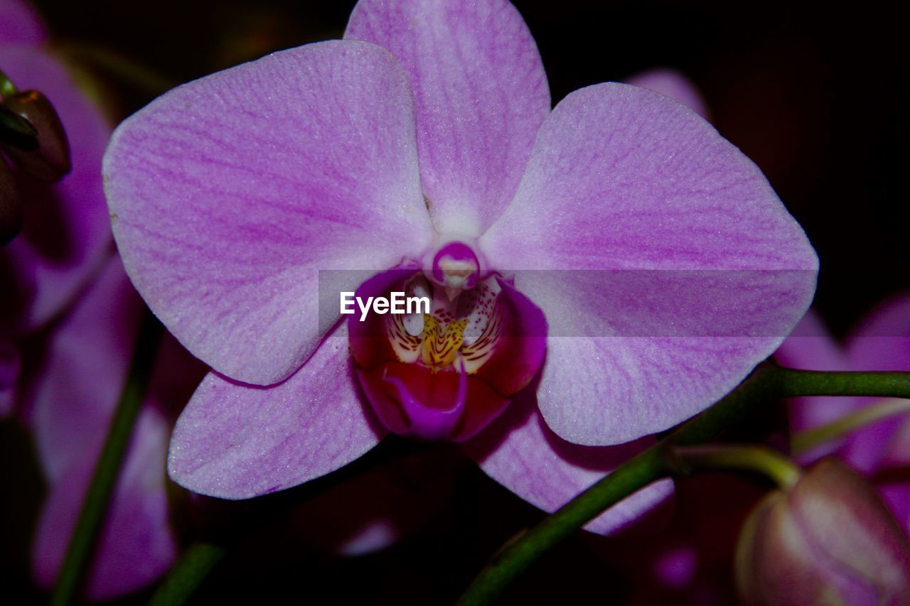 flower, petal, flower head, beauty in nature, nature, growth, fragility, plant, no people, close-up, purple, outdoors, freshness, pink color, day, blooming