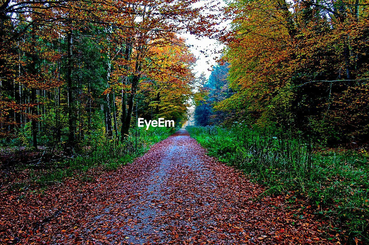 autumn, change, the way forward, leaf, tree, nature, diminishing perspective, scenics, beauty in nature, tranquility, forest, tranquil scene, day, outdoors, no people, road, growth, landscape, sky