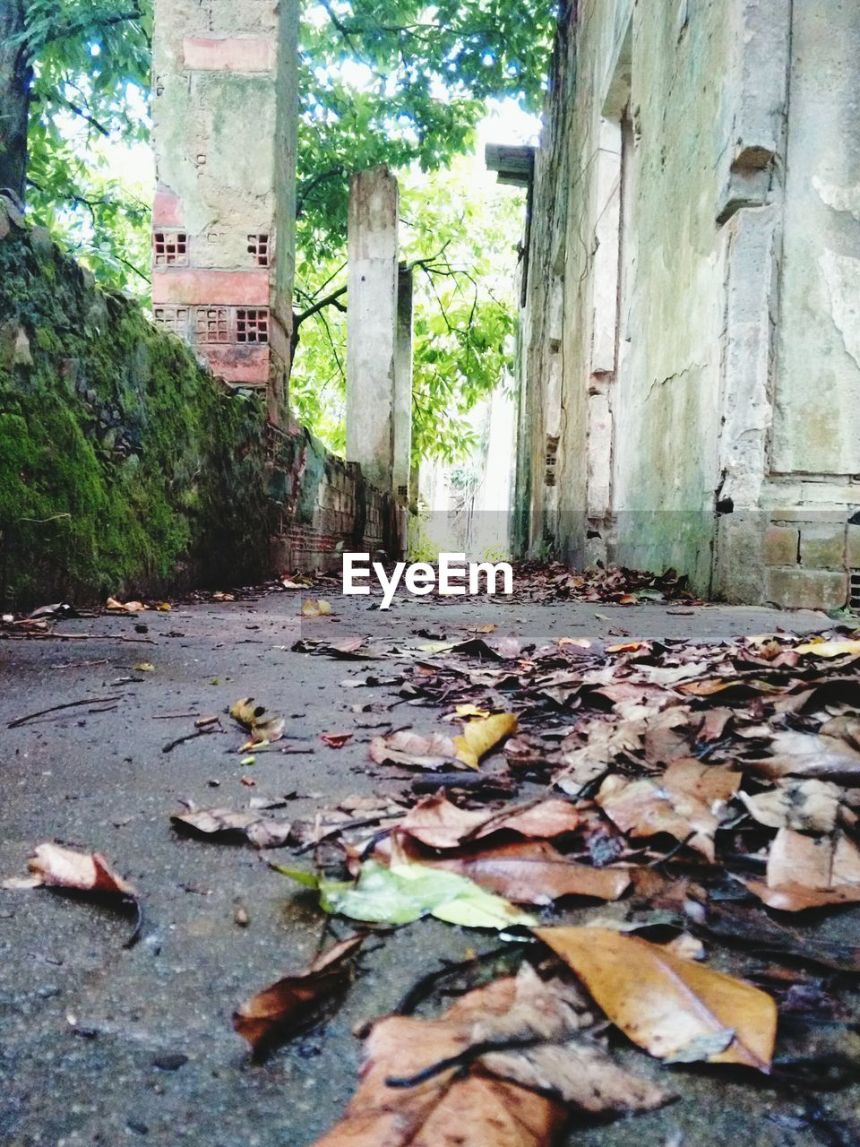 leaf, autumn, change, leaves, fallen, dry, day, no people, tree, nature, architecture, abandoned, outdoors, built structure, building exterior, close-up