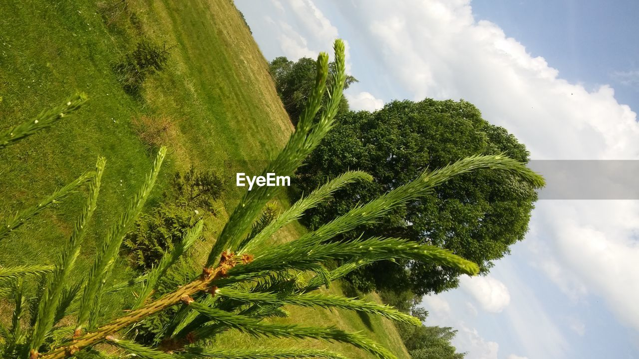 green color, plant, growth, cloud - sky, sky, beauty in nature, tree, nature, day, tranquility, no people, low angle view, leaf, tranquil scene, outdoors, scenics - nature, plant part, environment, land, landscape
