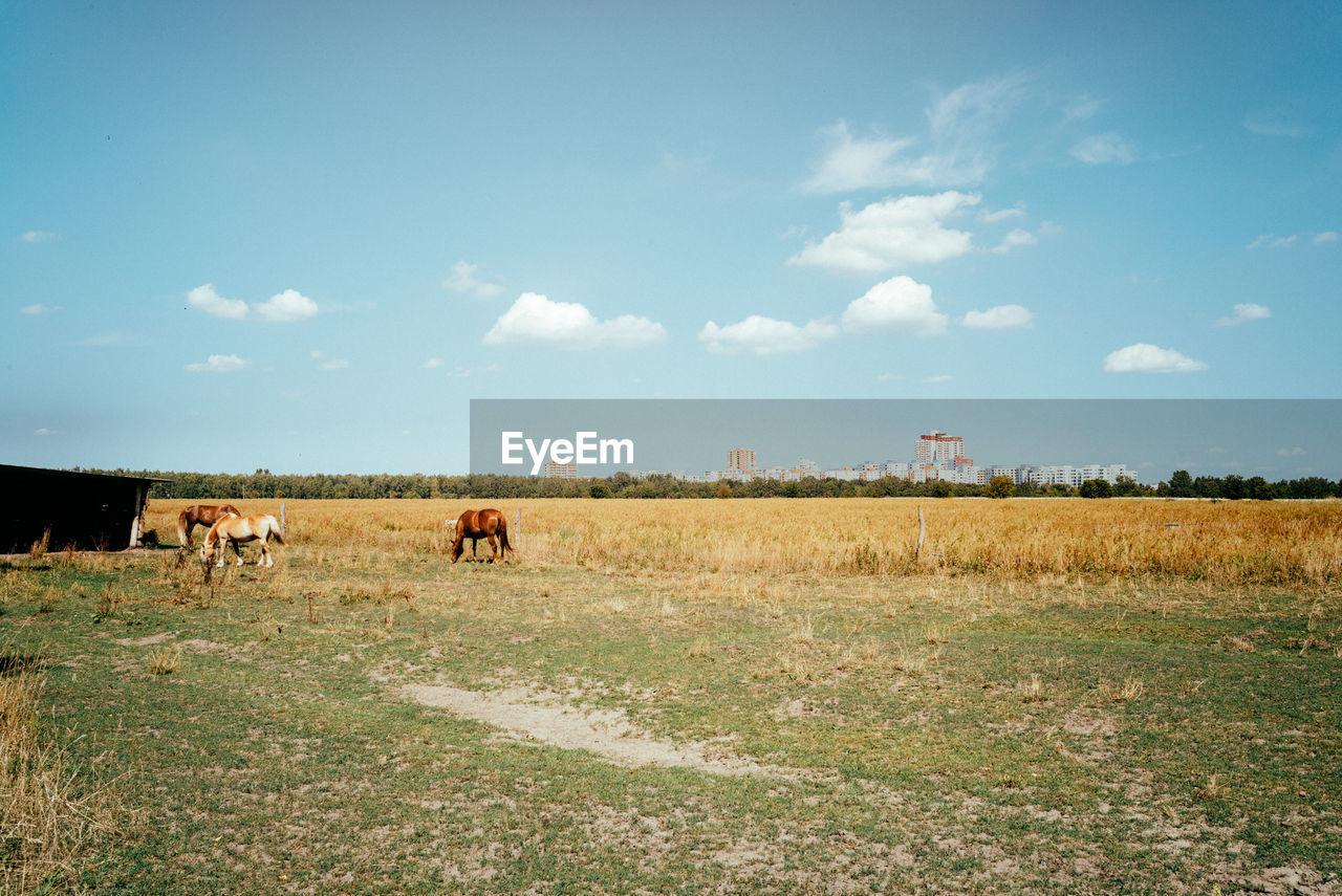 Horses On Field Against Blue Sky