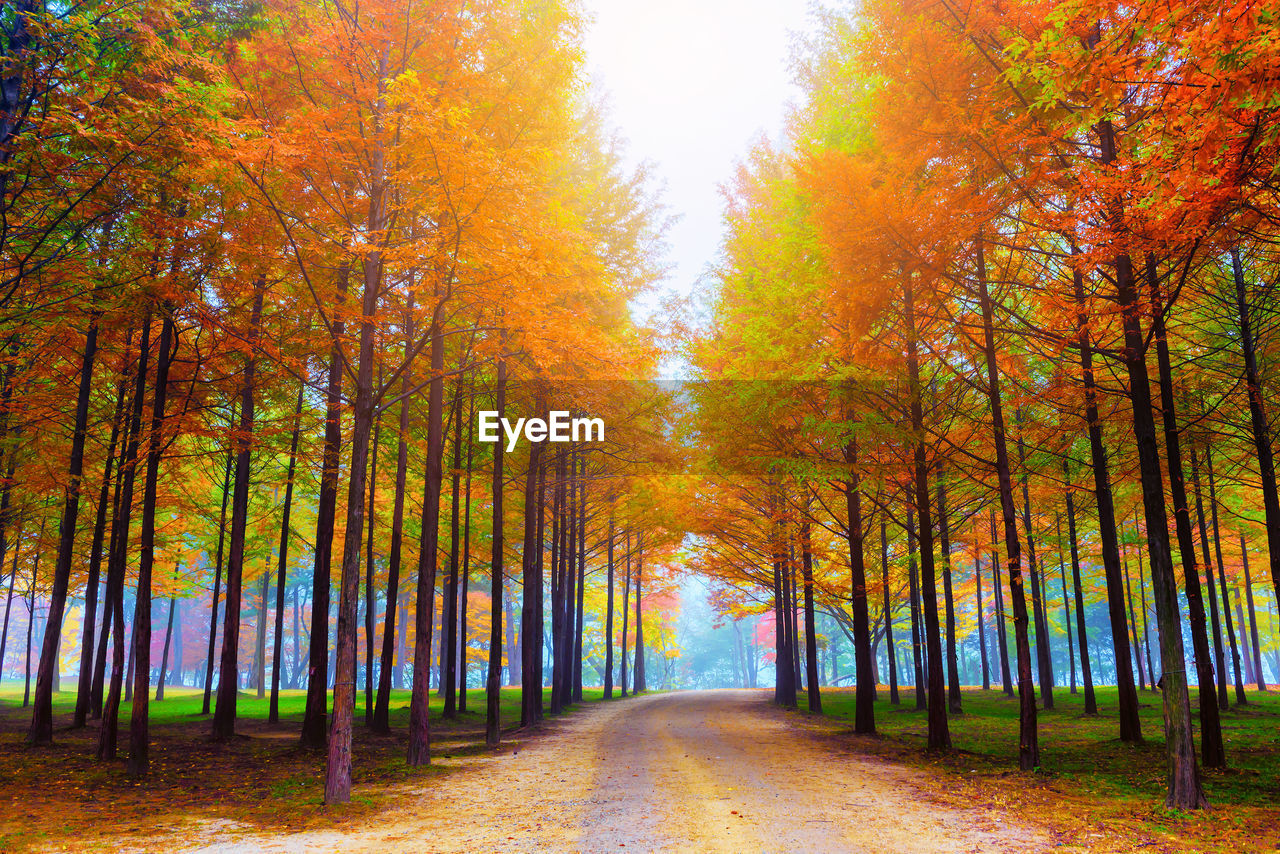 tree, autumn, plant, change, tranquility, beauty in nature, scenics - nature, direction, the way forward, forest, tranquil scene, road, nature, no people, diminishing perspective, land, growth, treelined, idyllic, landscape, woodland, outdoors