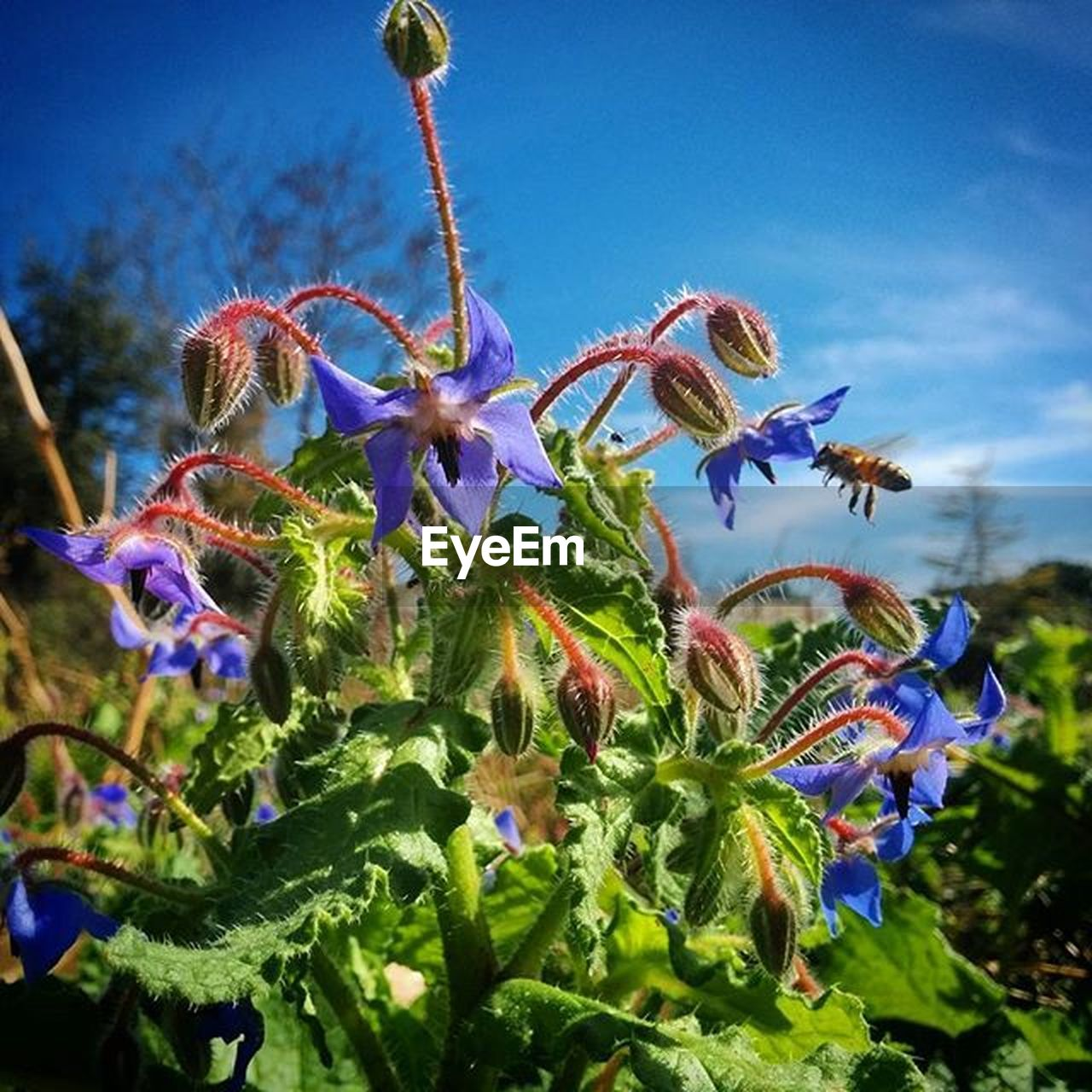 growth, flower, fragility, beauty in nature, nature, freshness, plant, close-up, day, no people, petal, flower head, outdoors, low angle view, blue, focus on foreground, stamen, blooming, sky, passion flower